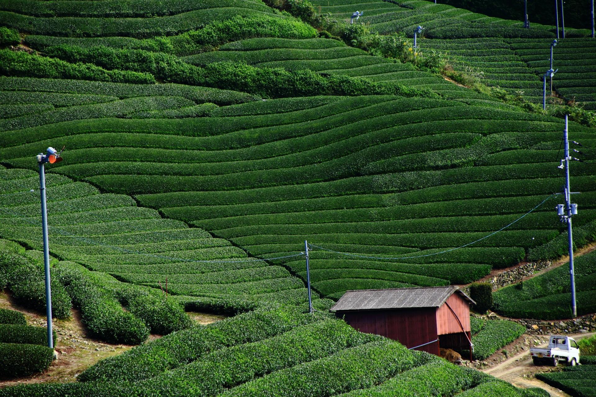 高画質 写真 石寺 茶畑