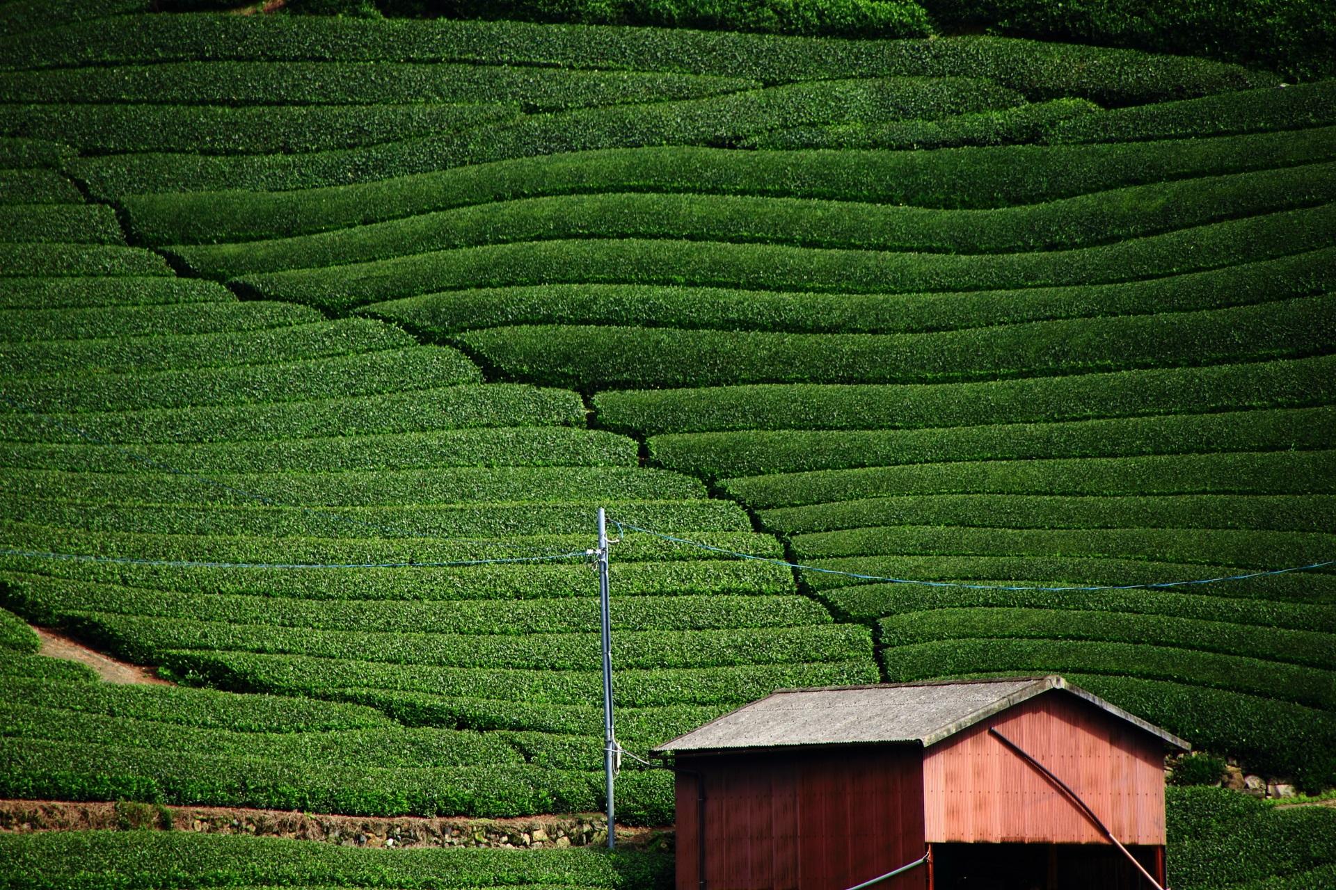 美しいお茶畑の景観から「茶源郷」とも呼ばれる和束町