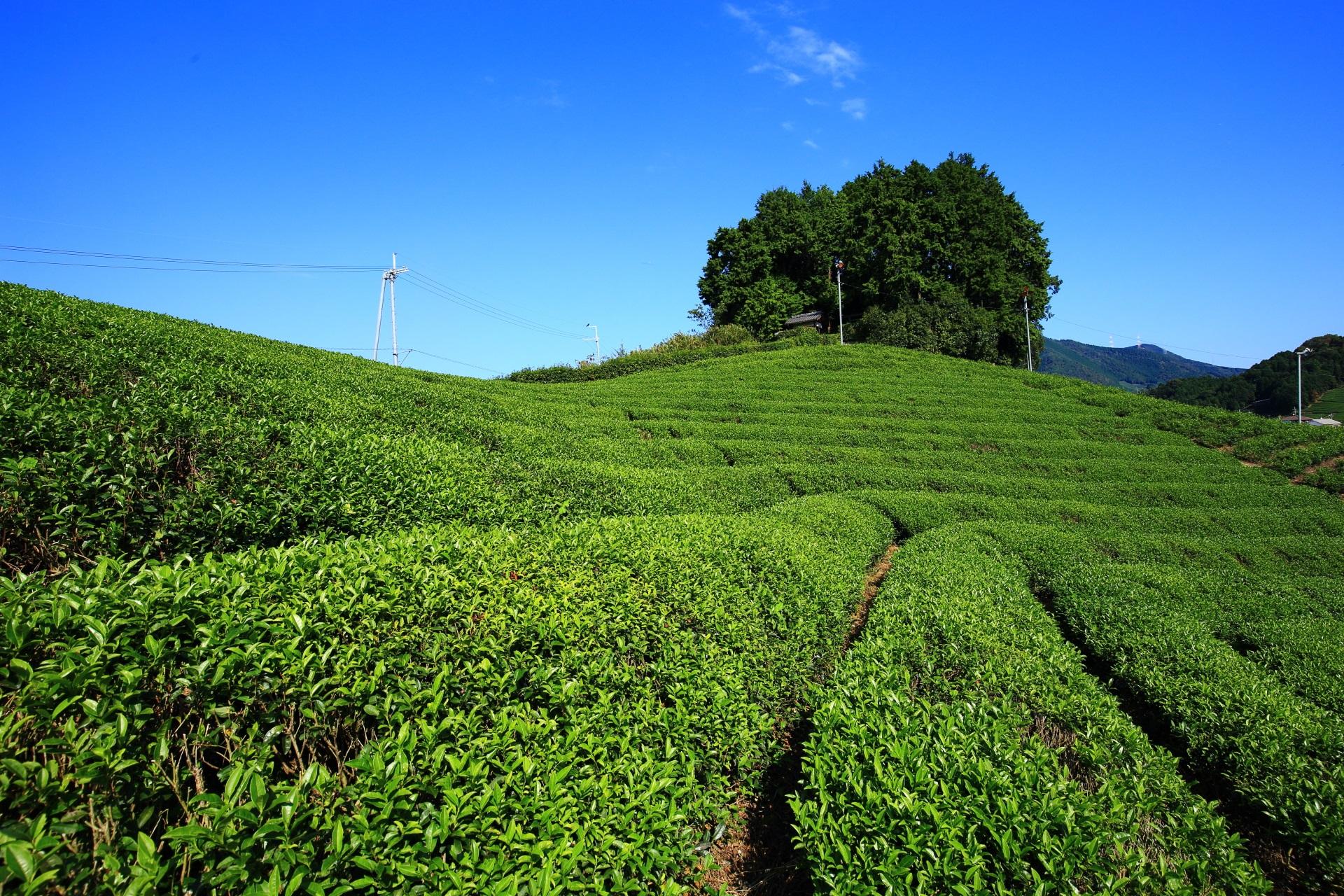 周りにはお茶畑が広がる安積親王陵墓