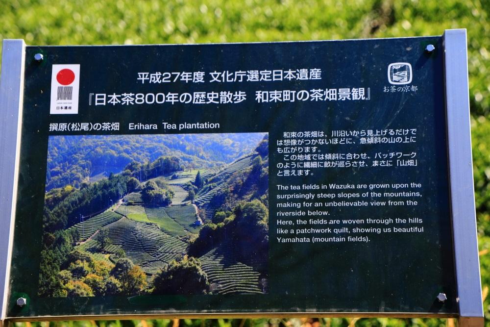 和束町の撰原地区の茶畑の説明