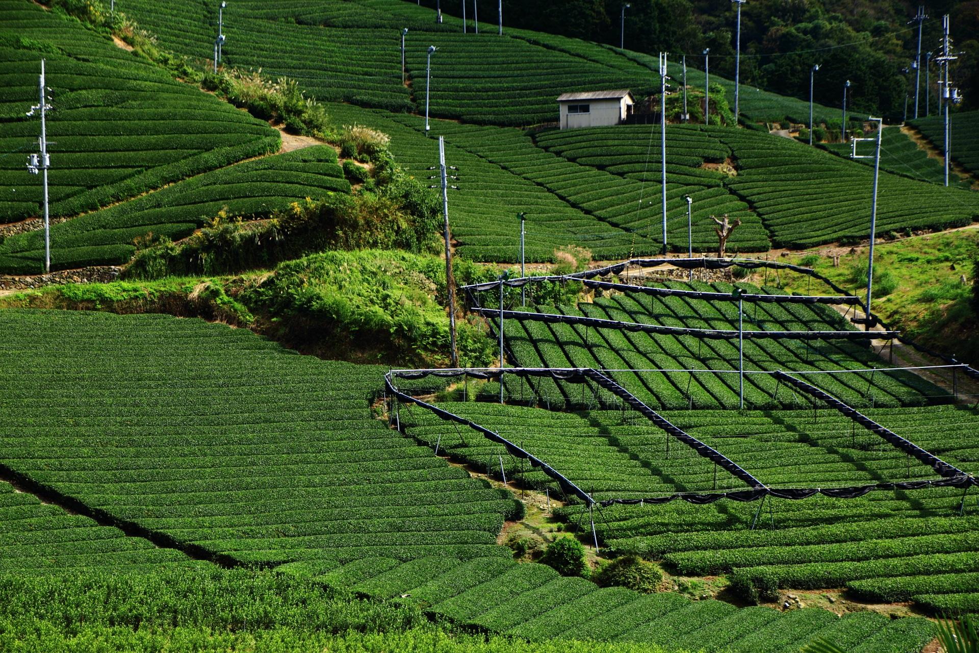 何重にも繋がるいろんな形をしたお茶畑の景色