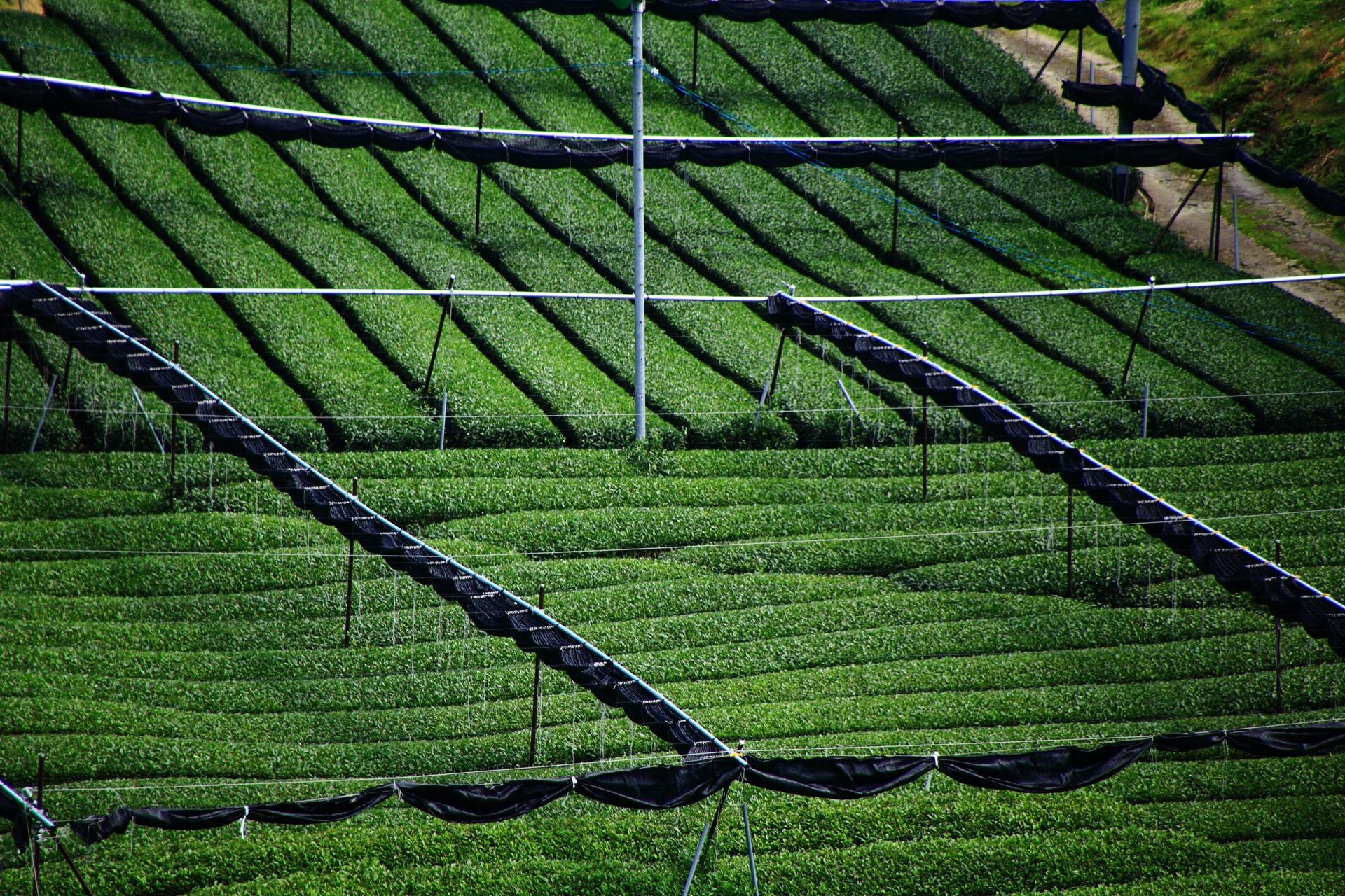茶畑に設置される黒いシートで覆うための器具