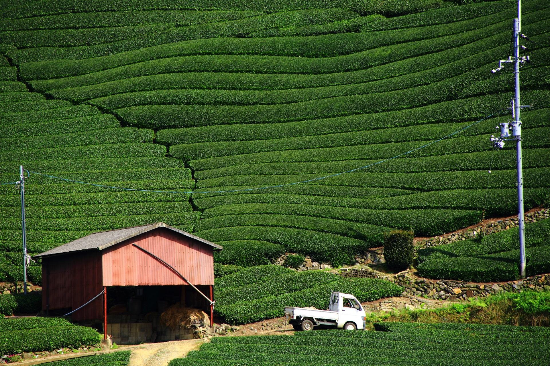 小屋と軽トラックが演出する美しいお茶畑
