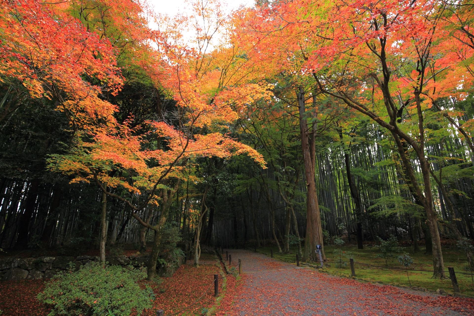 色とりどりの秋につつまれる竹の寺