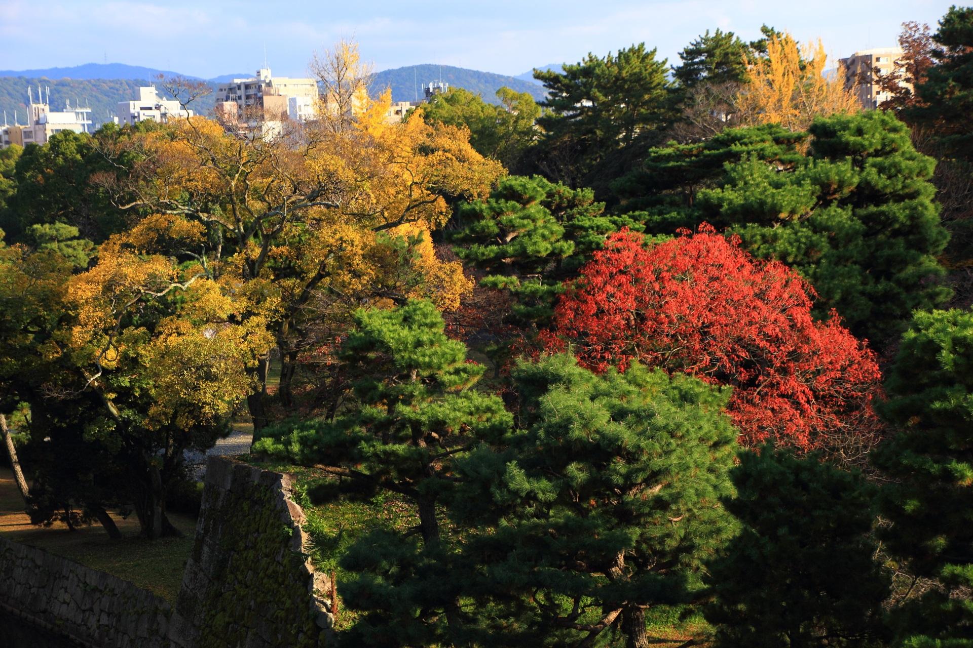 二条城の天守閣跡から眺めた緑の中で燃えるように華やぐ紅葉