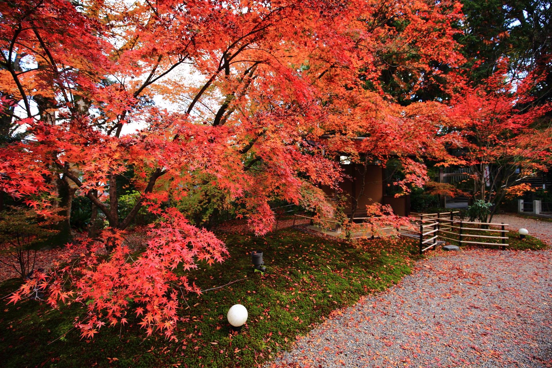 長岡天満宮の素晴らしい紅葉と秋の情景に感謝