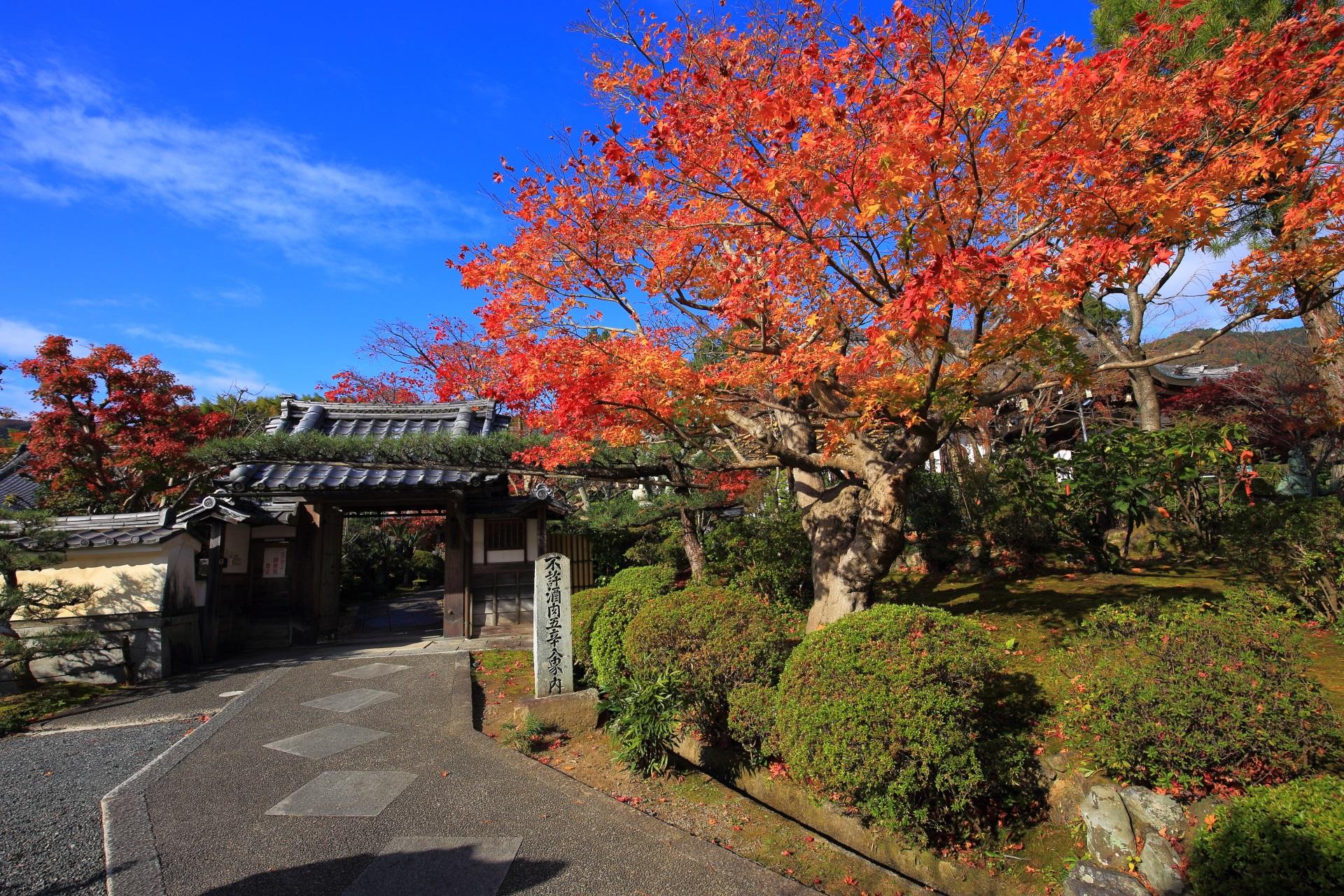 青空の下で華やぐ煌びやかな紅葉と正法寺の山門