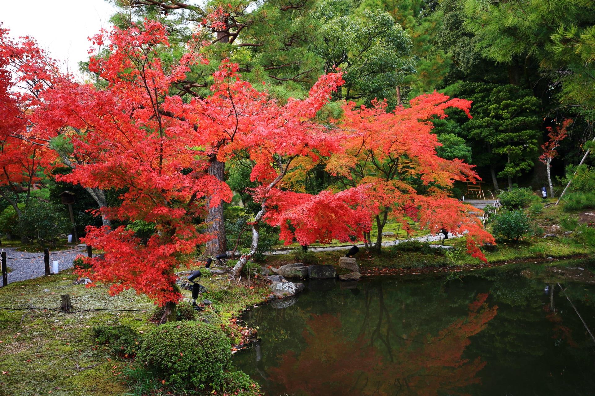等持院の水辺を彩る鮮やかな紅葉