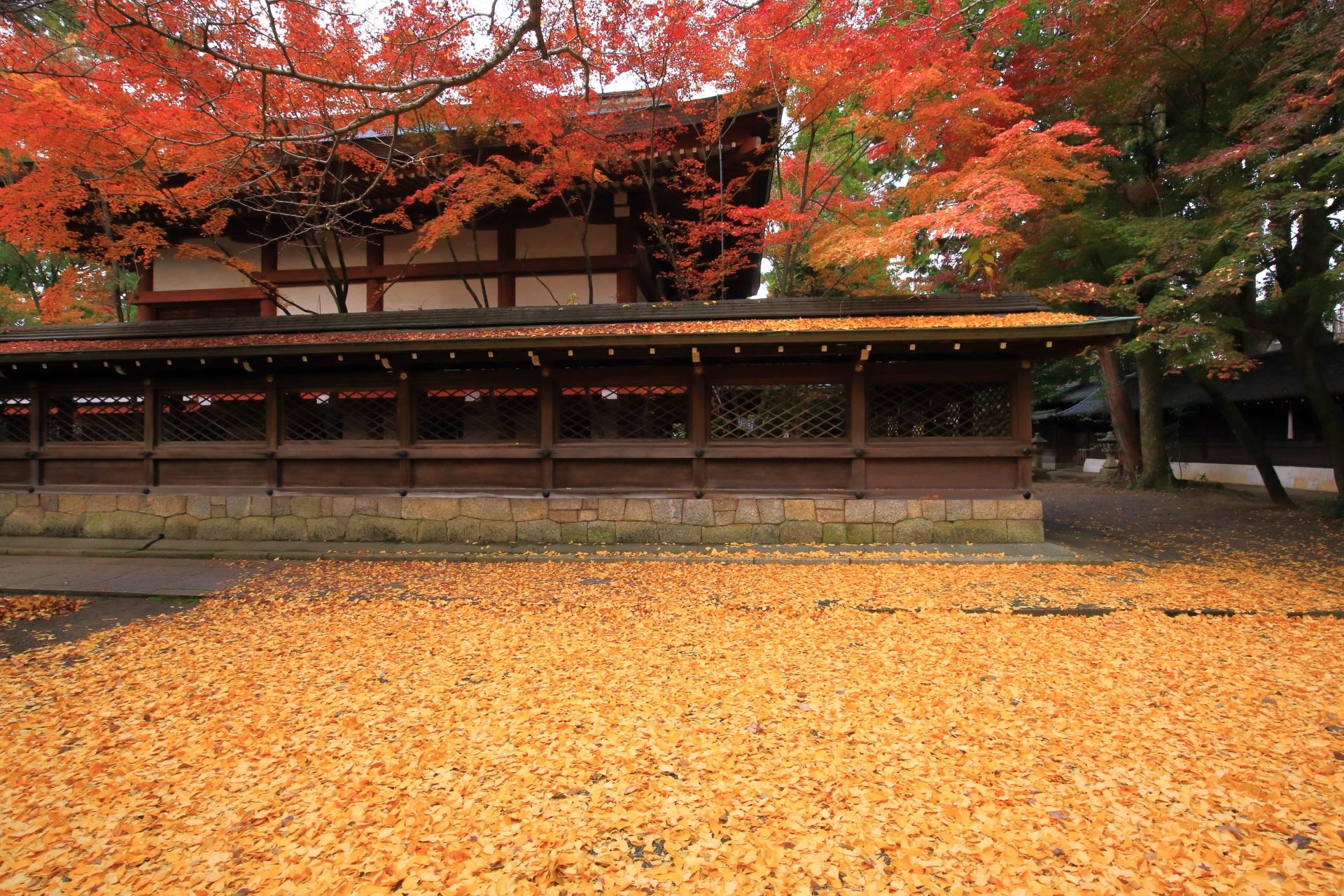 上御霊神社の見事な銀杏の黄色い絨毯と華やぐ紅葉