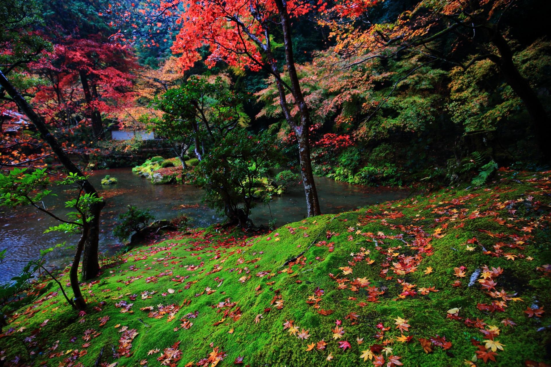 南禅院(なんぜんいん)の鮮やかな緑の苔を彩る色とりどりの散りもみじ