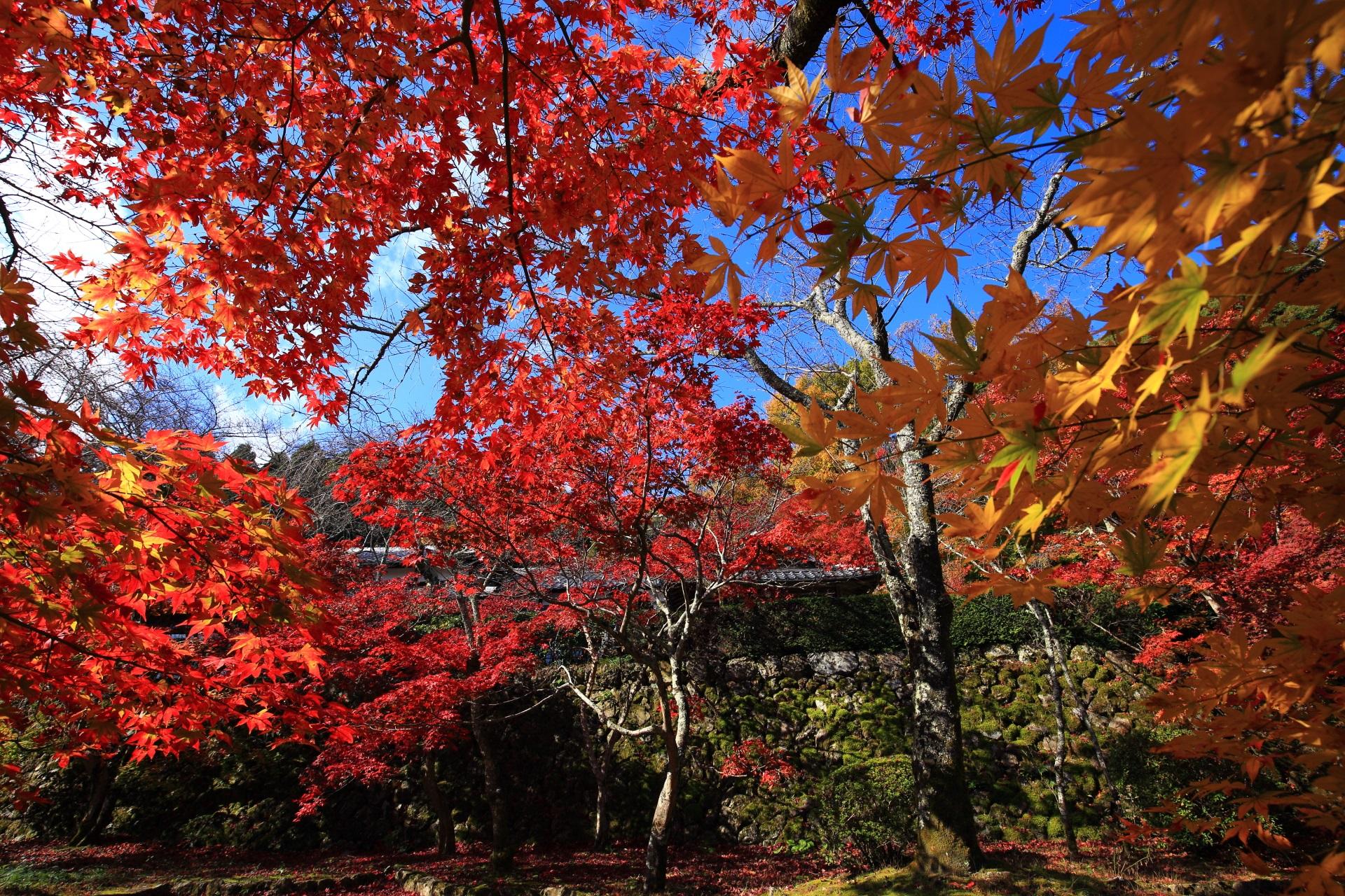 勝持寺の素晴らしすぎる紅葉と秋の情景