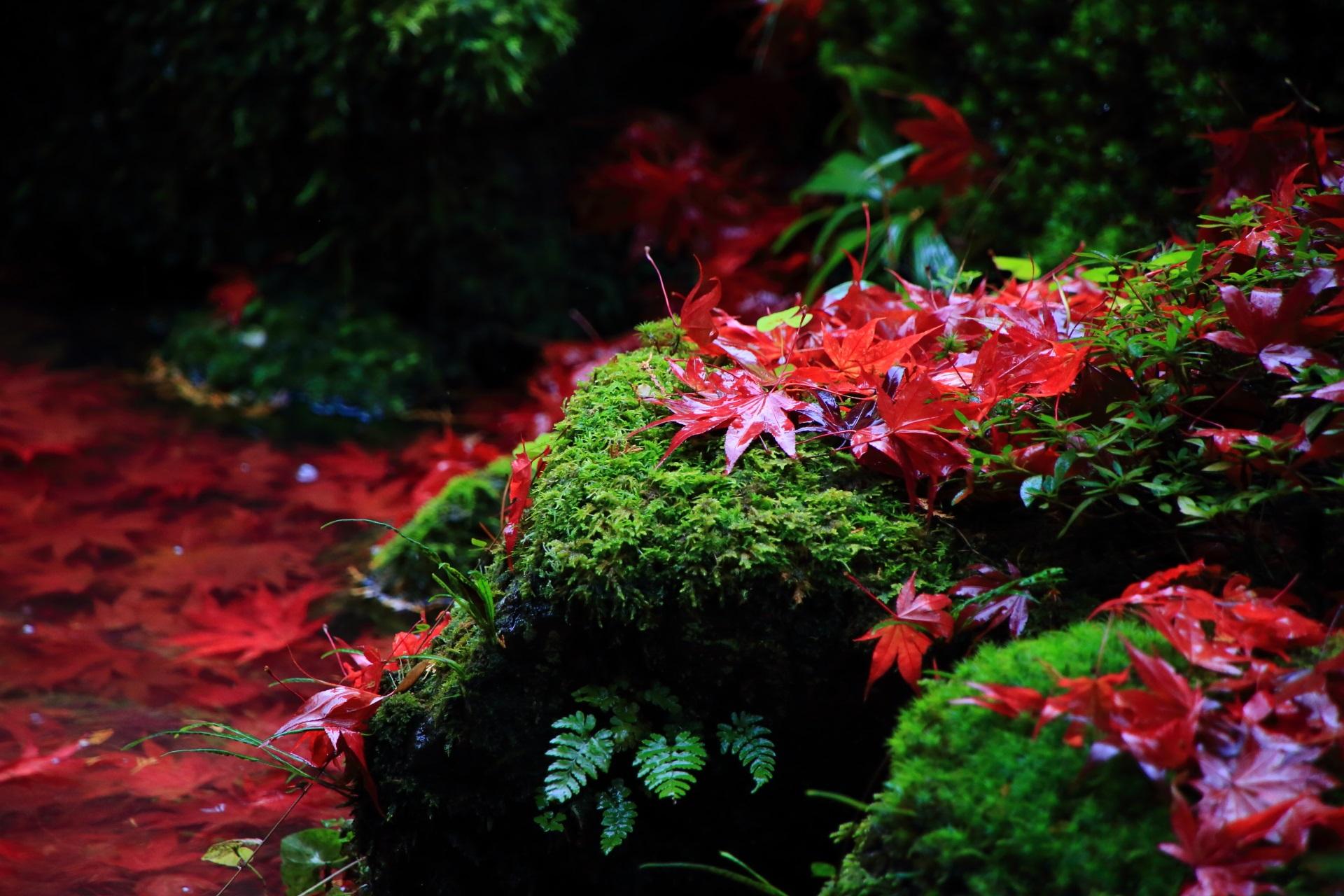 苔と水辺を染める絵になりすぎる素晴らしい散り紅葉