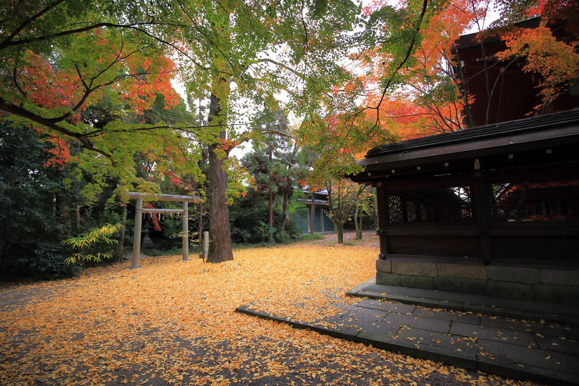 上御霊神社の末社の神明神社と散り銀杏