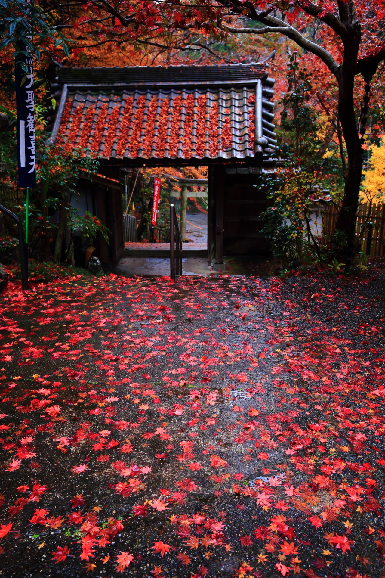 Kyoto Yamashina-shoten Temple colored leaves