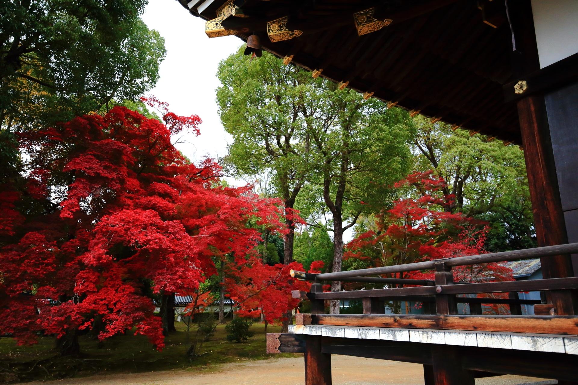 金堂の横で豪快に色づく紅葉