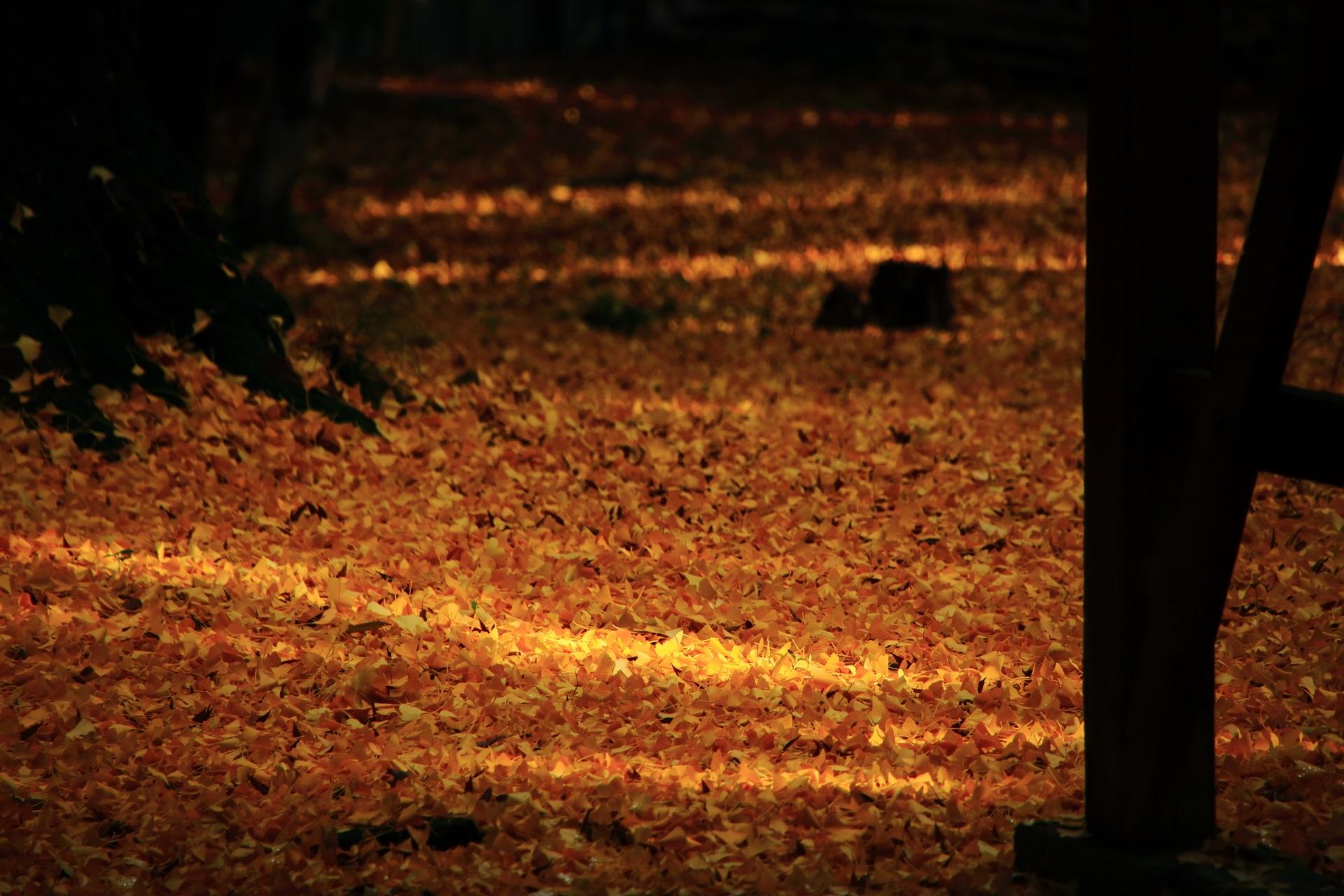 木漏れ日も良い雰囲気の山崎聖天の散り銀杏