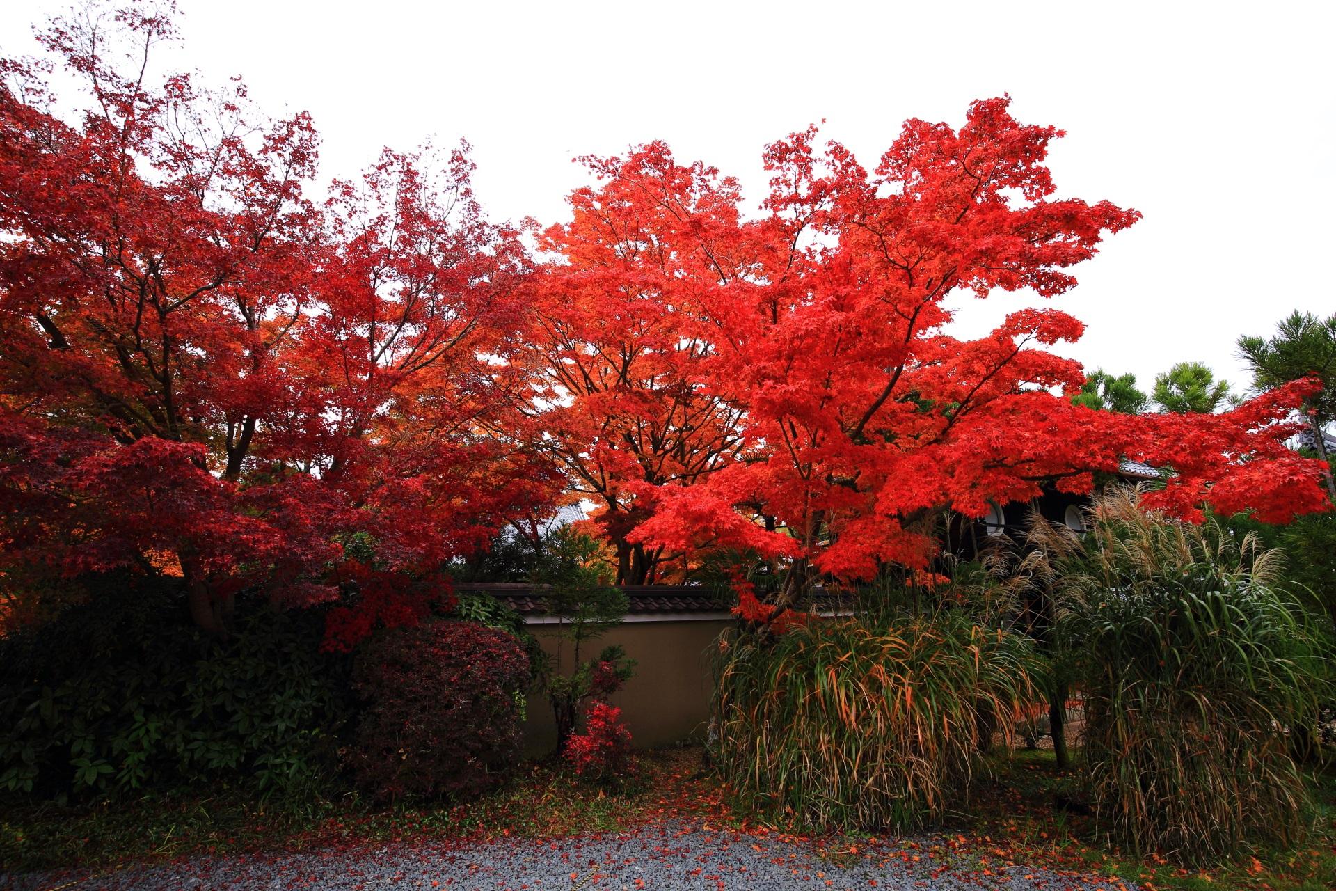 葉の密度も高く良い状態の良く色づいた源光庵の紅葉