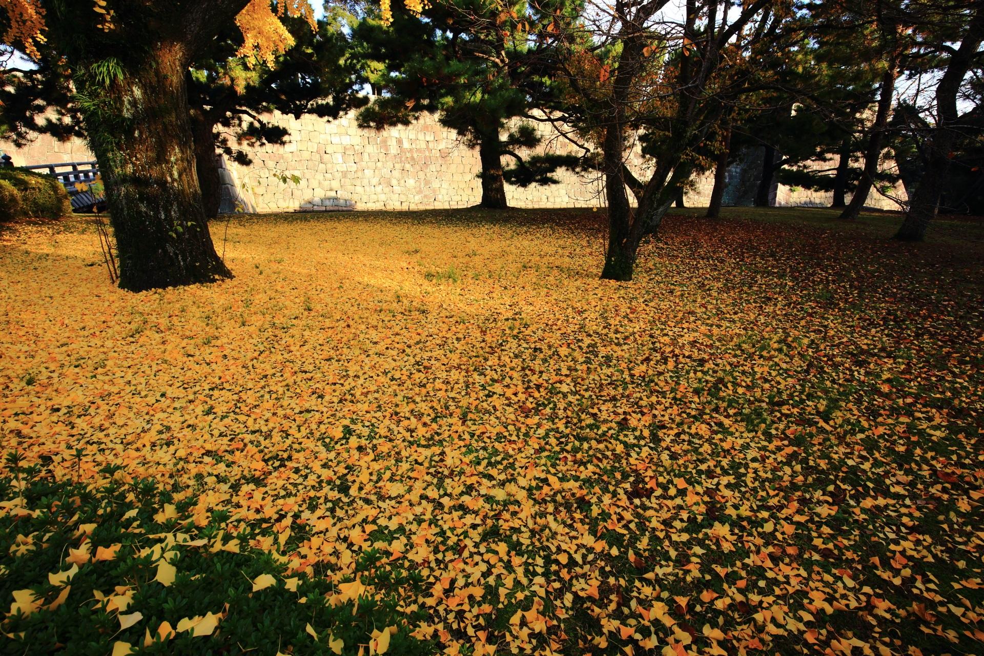 二条城の散り銀杏の華やかで上品な絨毯