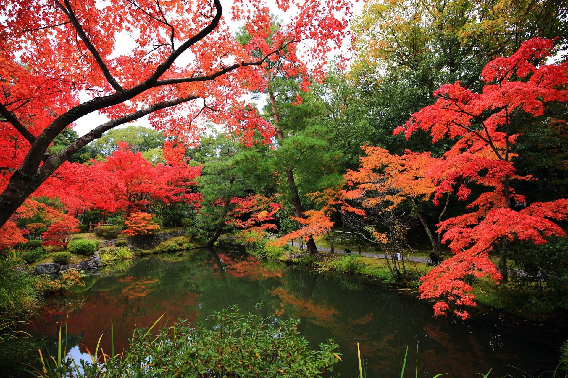 艶やかな紅葉が溢れる心字池