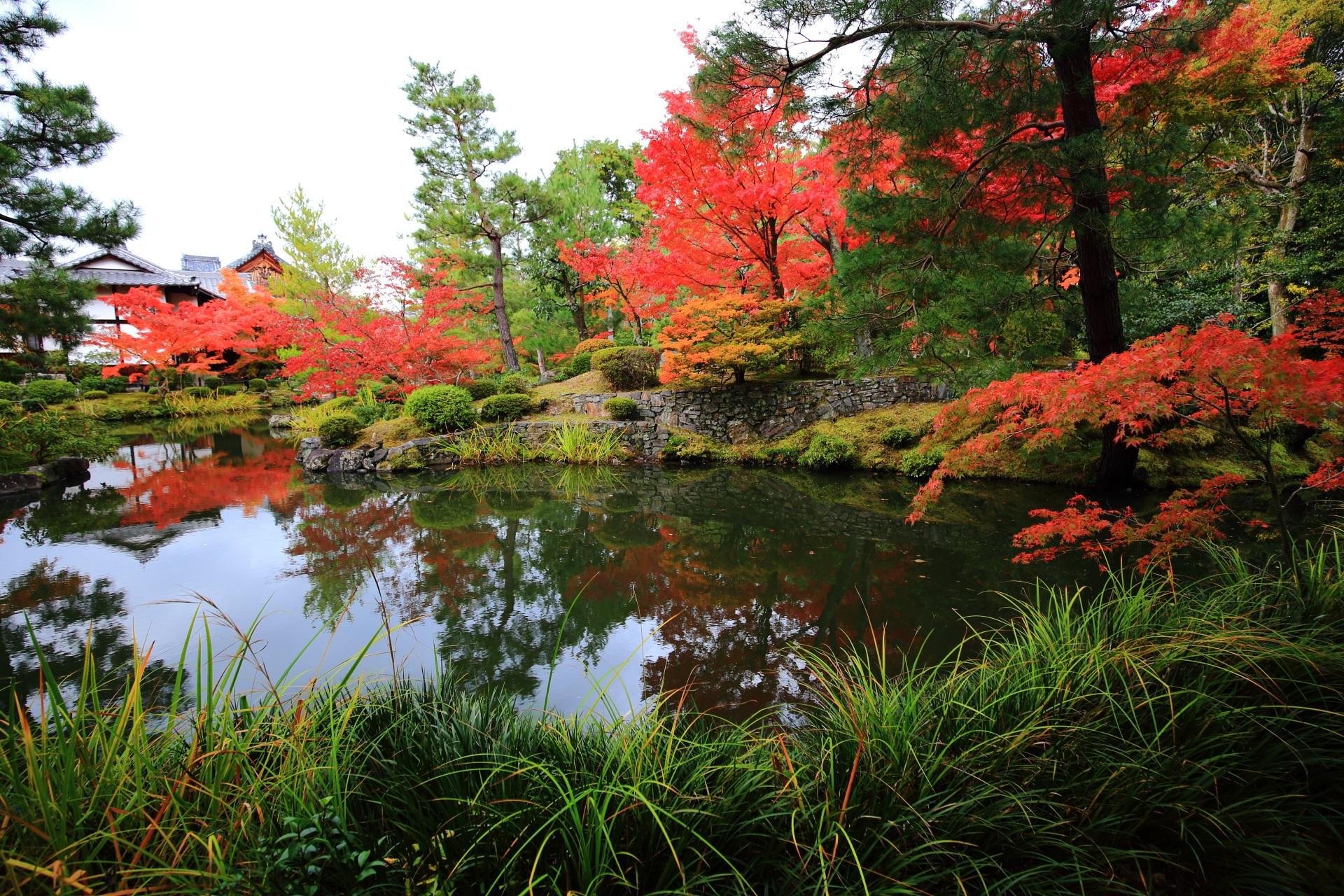 等寺院の綺麗ないろんな種類の木々や植物と紅葉