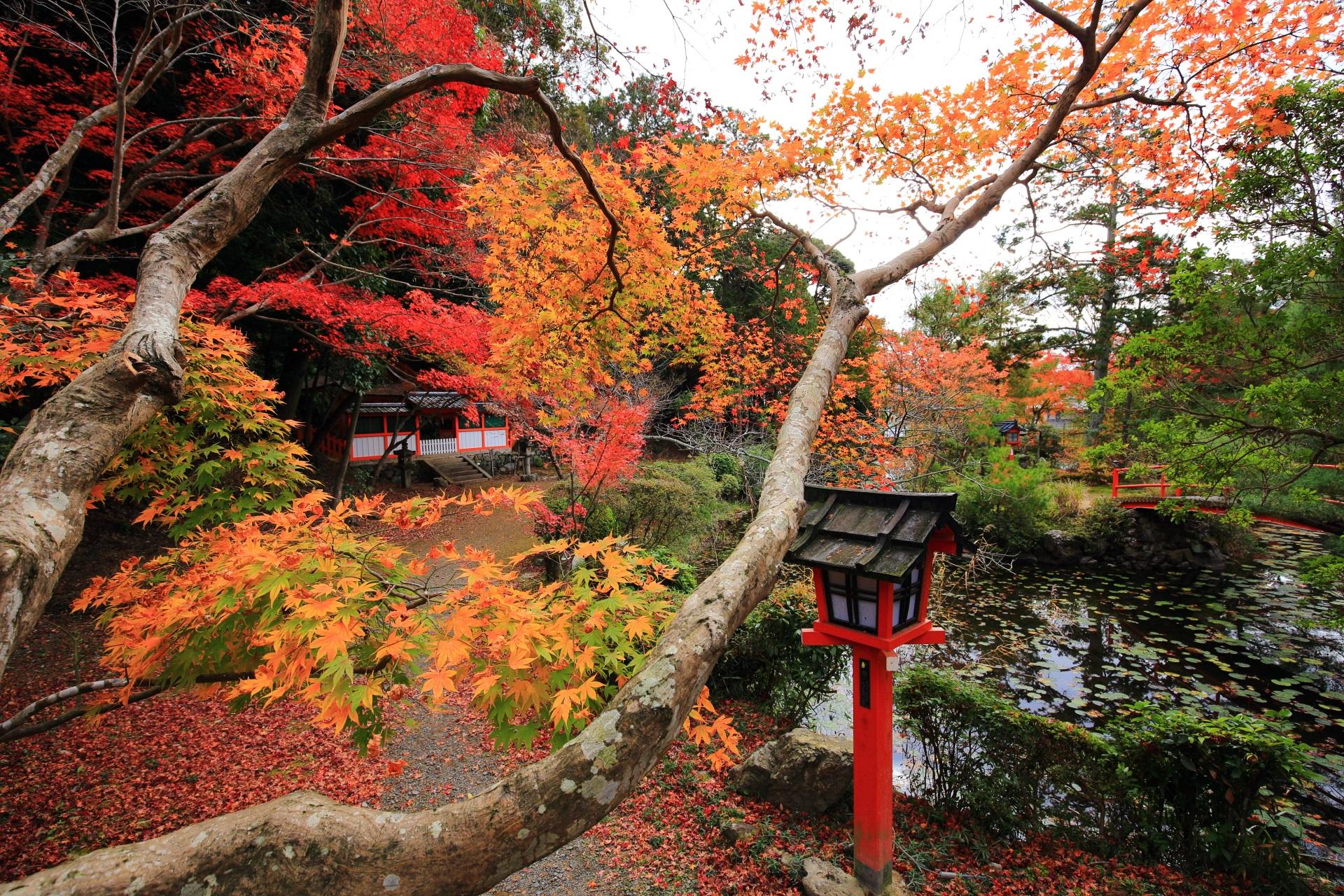 色とりどりの紅葉につつまれる鯉沢の池
