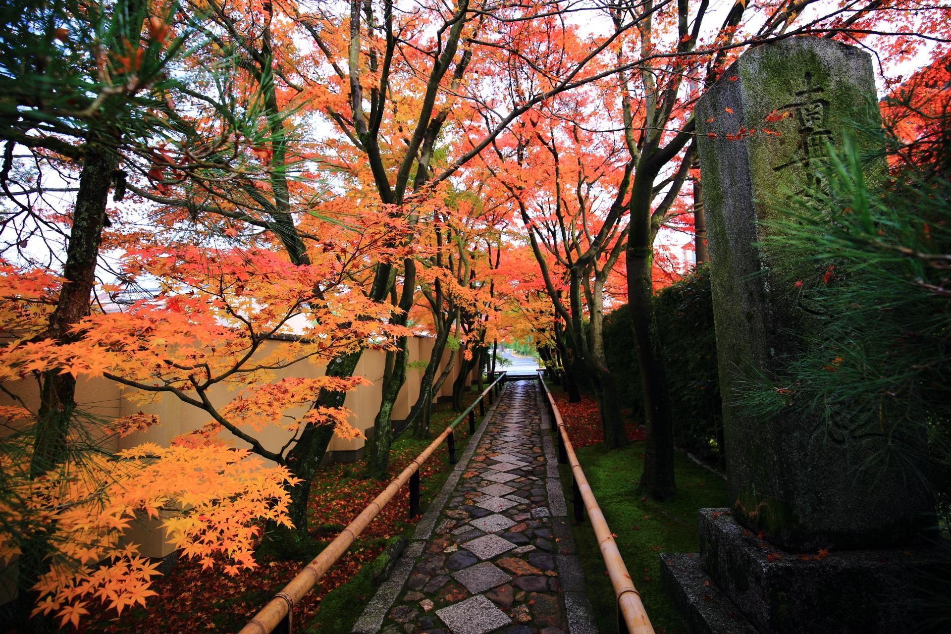 紅葉に染まる光悦寺の風情ある石畳の参道