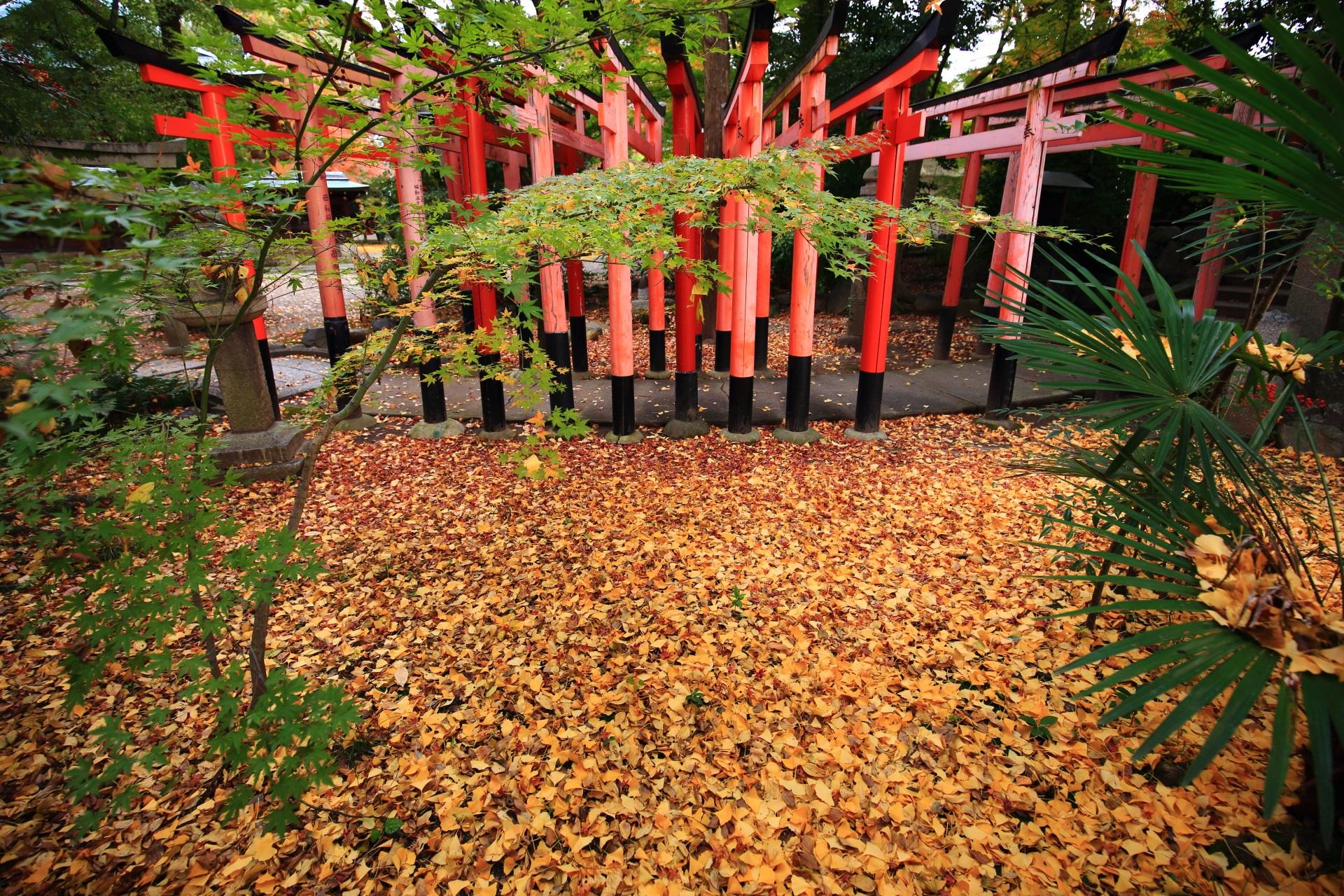 上御霊神社の福壽稲荷社の鳥居と散り銀杏