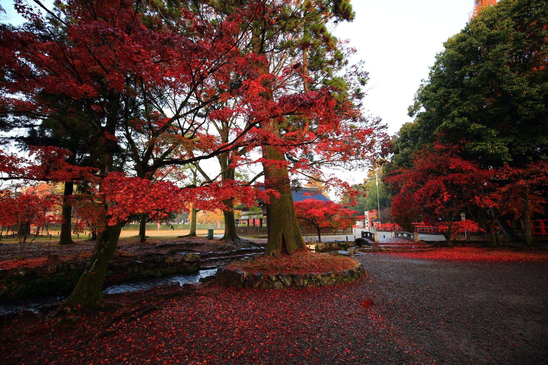 高画質 紅葉 上賀茂神社 写真