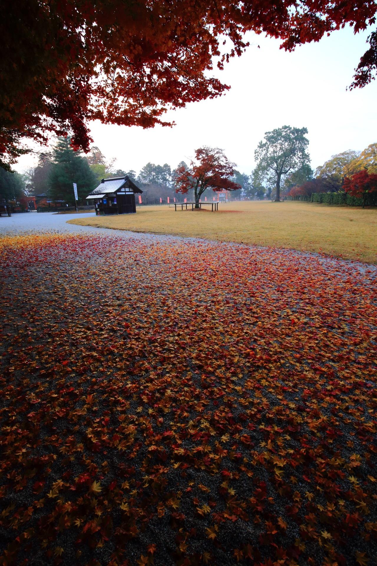 ほのかに照らされる散り紅葉と散り銀杏