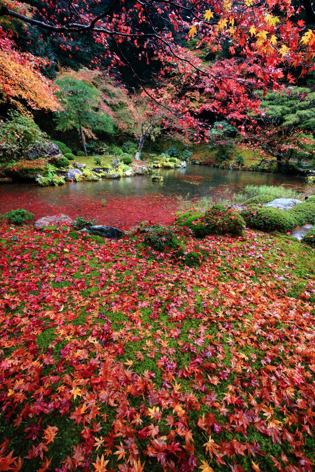 Kyoto Nanzenin-Temple colored leaves