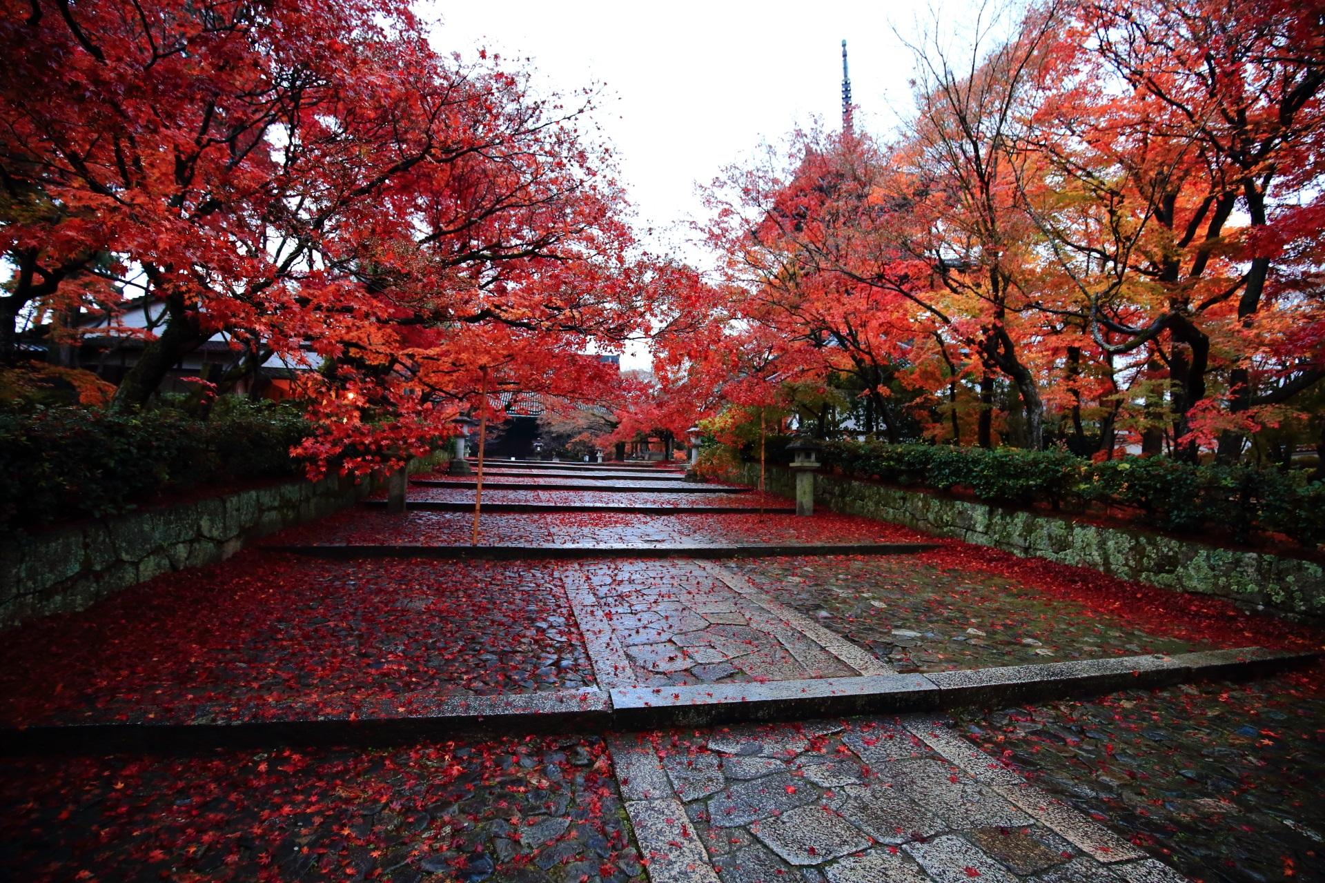 真如堂の雨で輝く絶品の紅葉の参道
