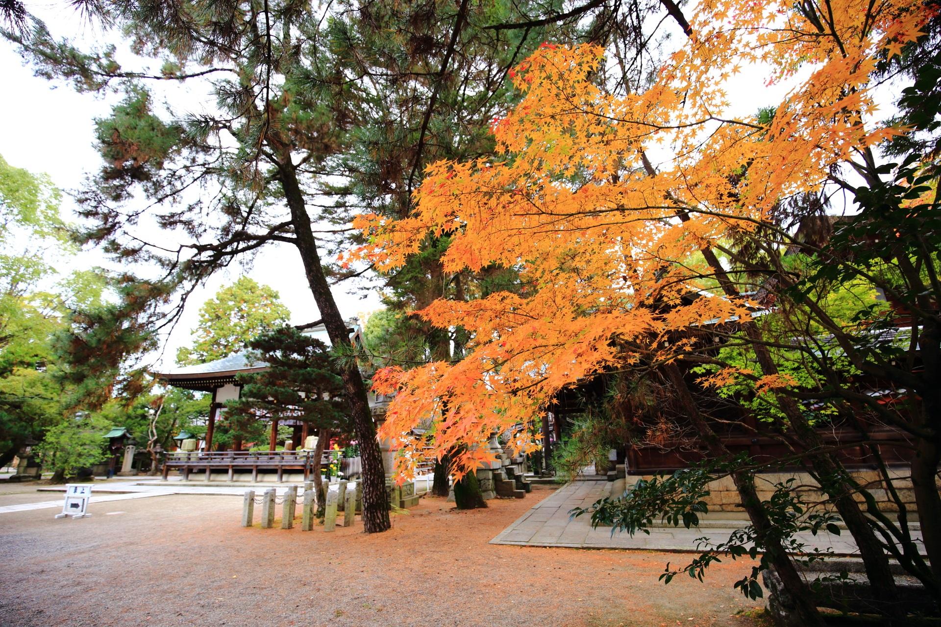 上御霊神社の本殿南側の華やかな黄色い紅葉