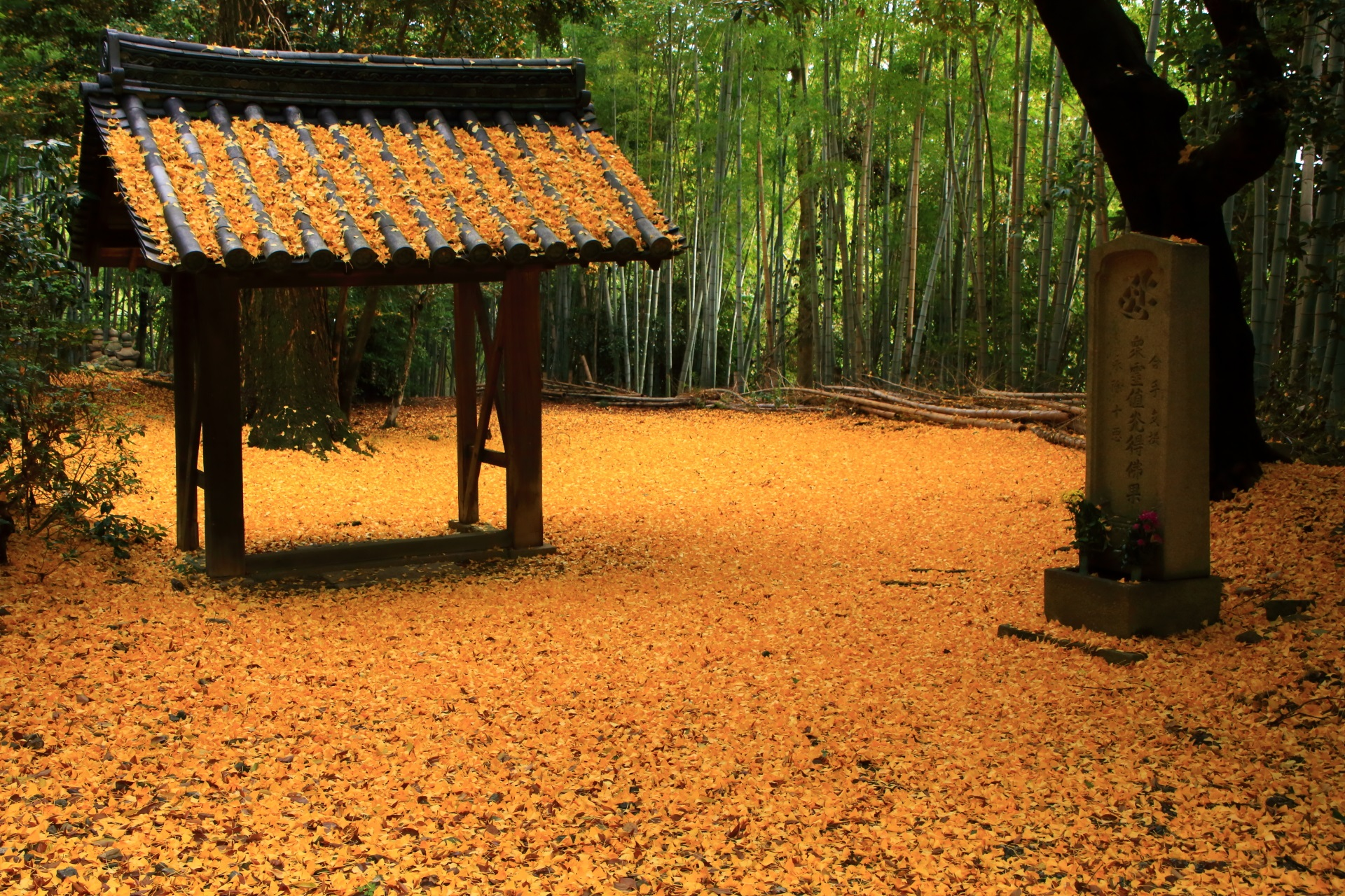 山崎聖天の素晴らしい散り銀杏と晩秋の情景