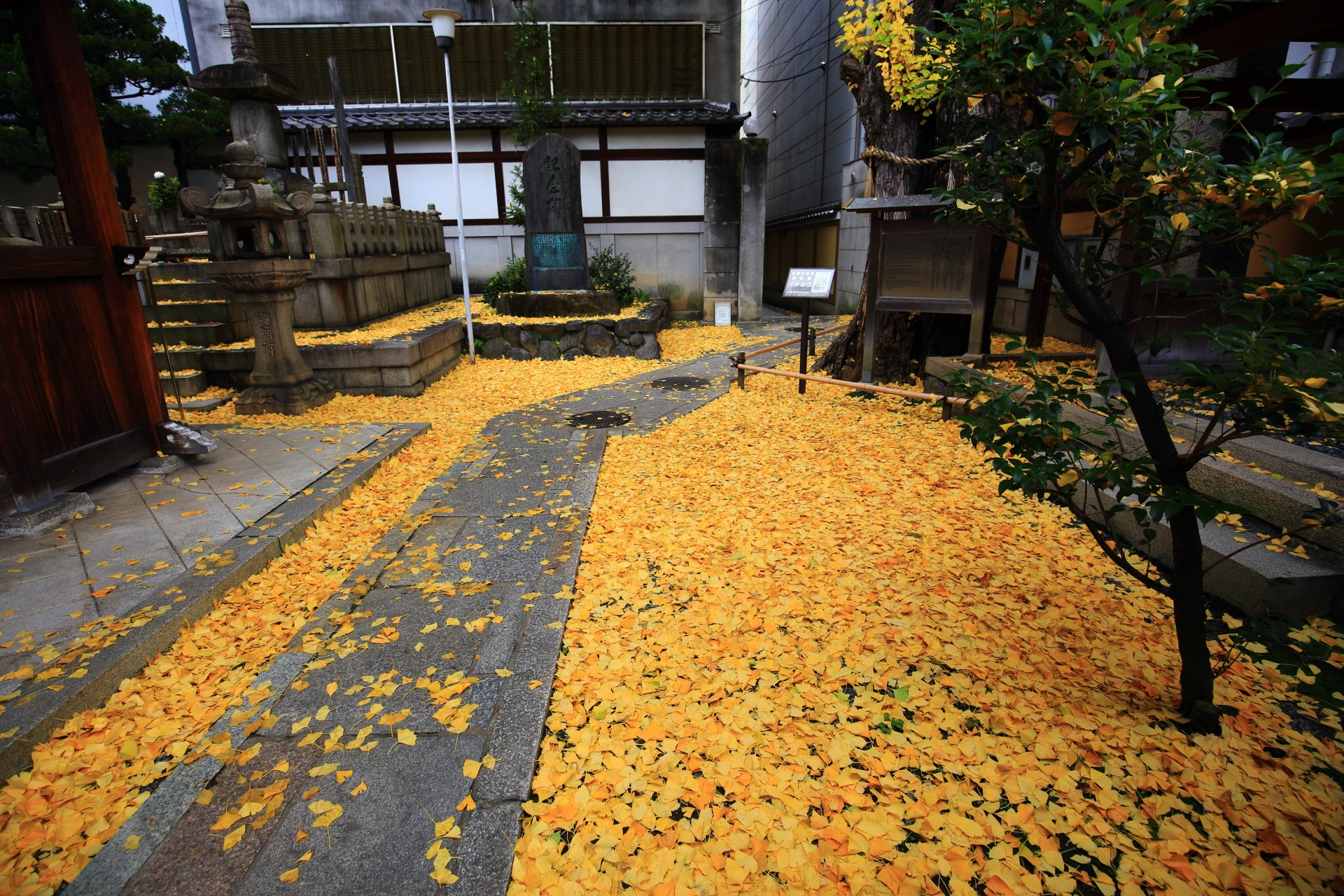 ginkgo Honno-ji Temple in Kyoto,Japan