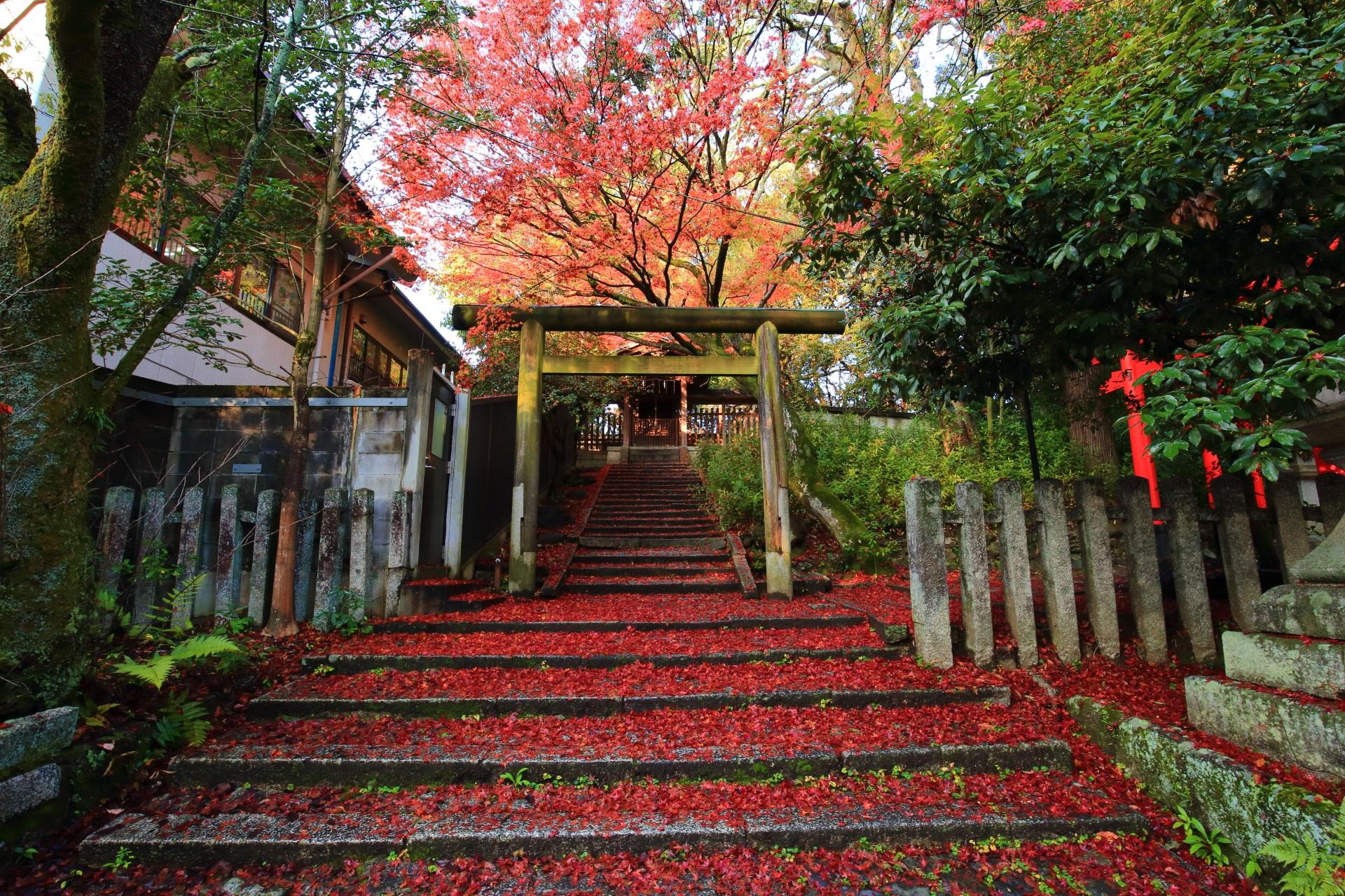 月読社と深い秋色の散り紅葉