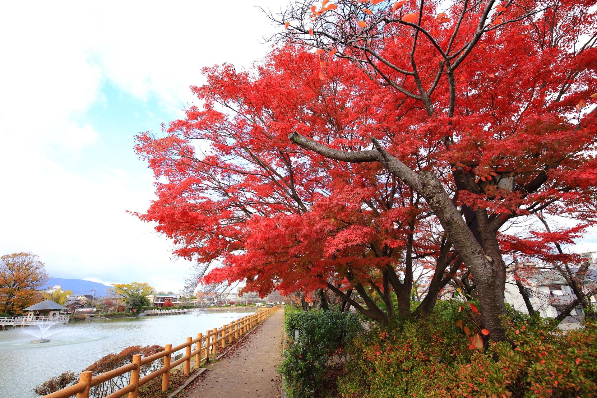 長岡天満宮の八条ヶ池の紅葉