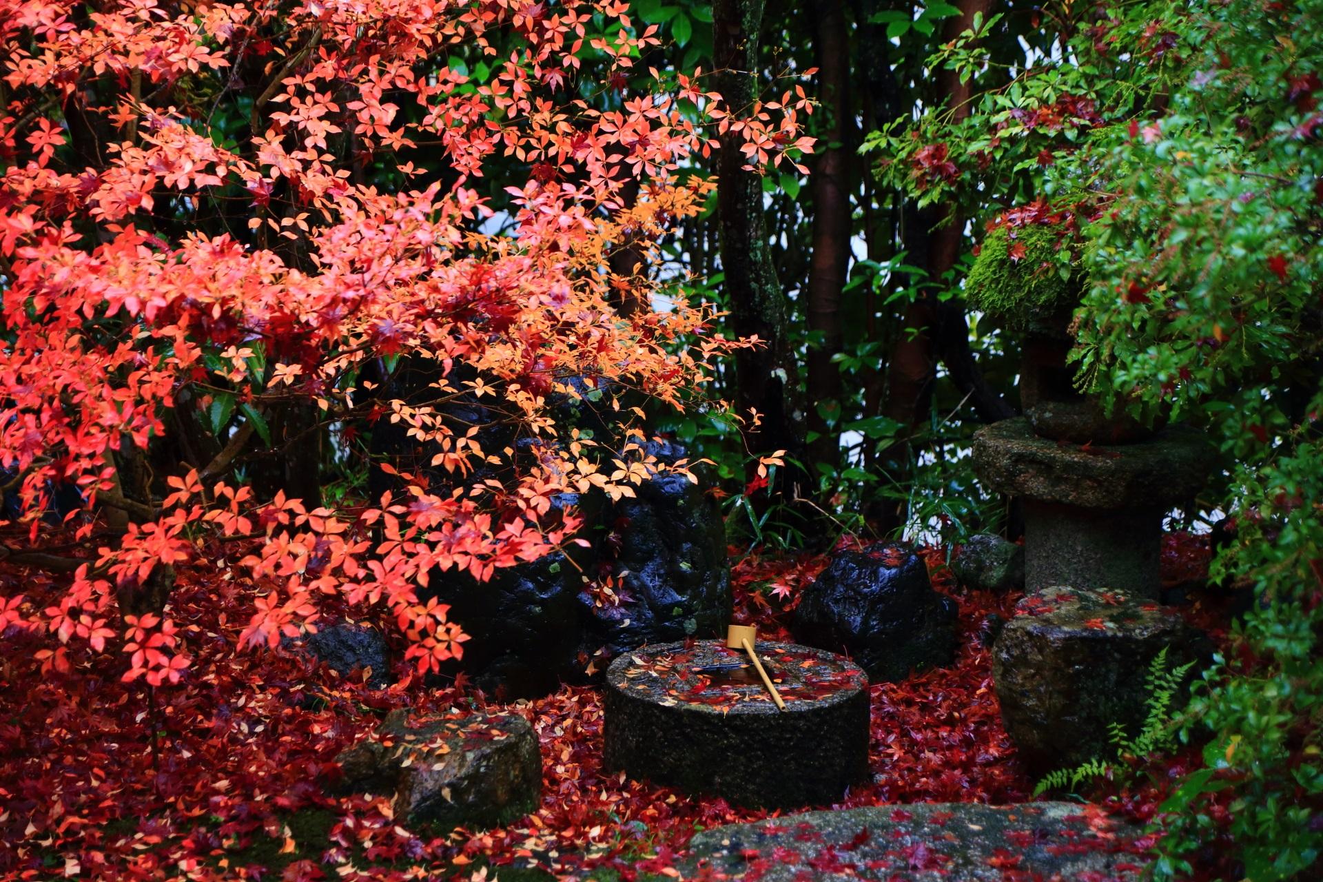 雨が美しさを引き立てる蹲の多彩な秋色
