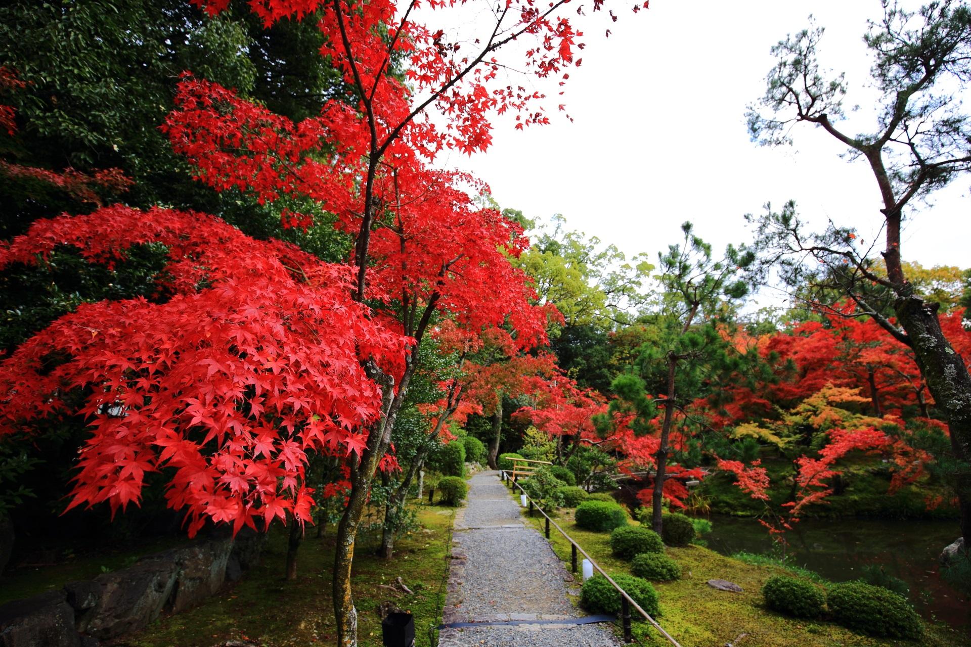 等持院の東庭と心字池で色づく真っ赤な紅葉