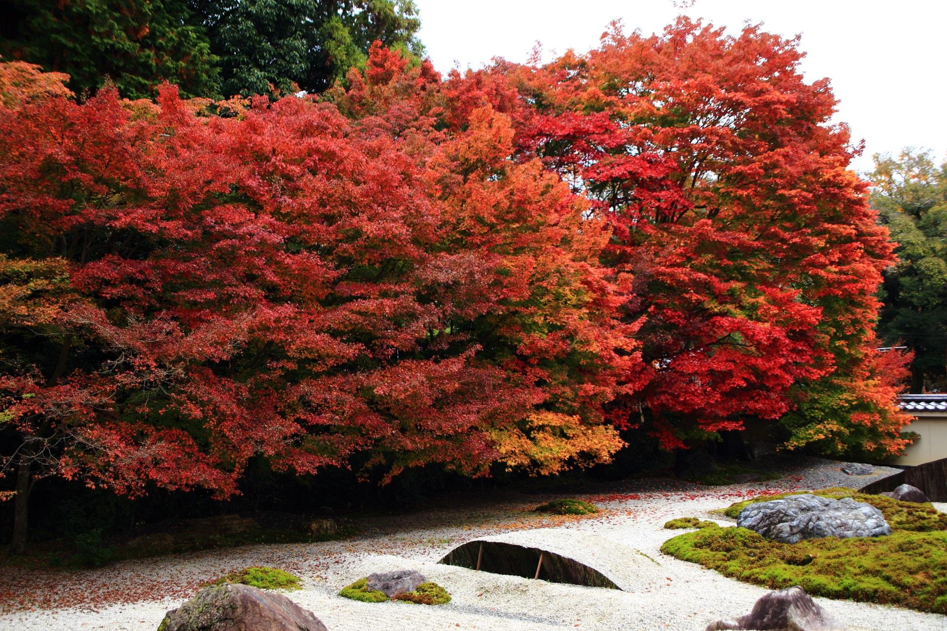 実相院門跡の石庭を彩る多彩な紅葉