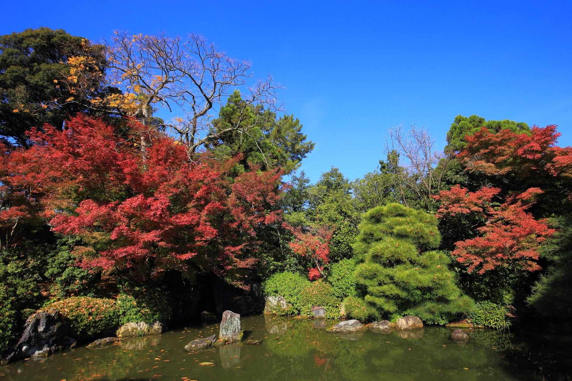 城南宮の水辺の鮮やかな紅葉と青空