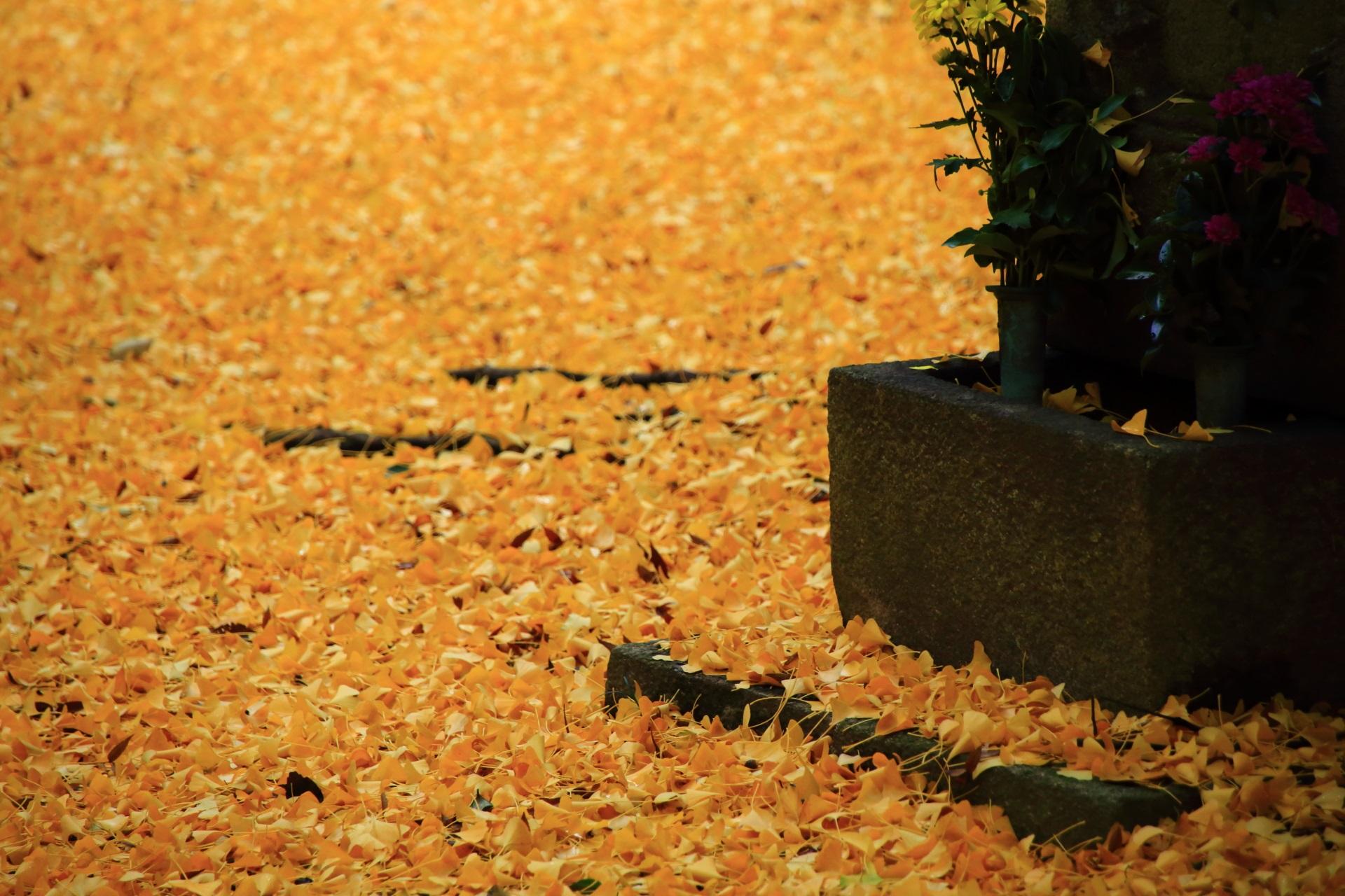 風情の中に華やかさが感じられる秋の情景
