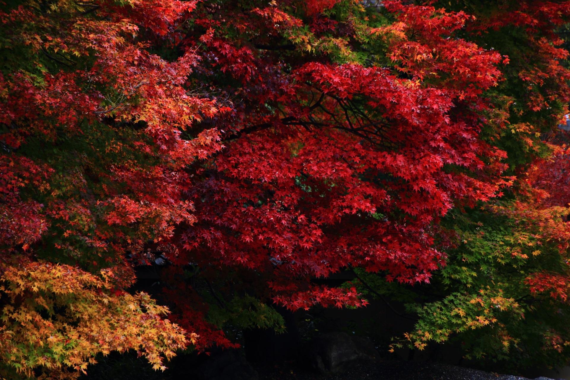 実相院門跡の深い秋の彩り