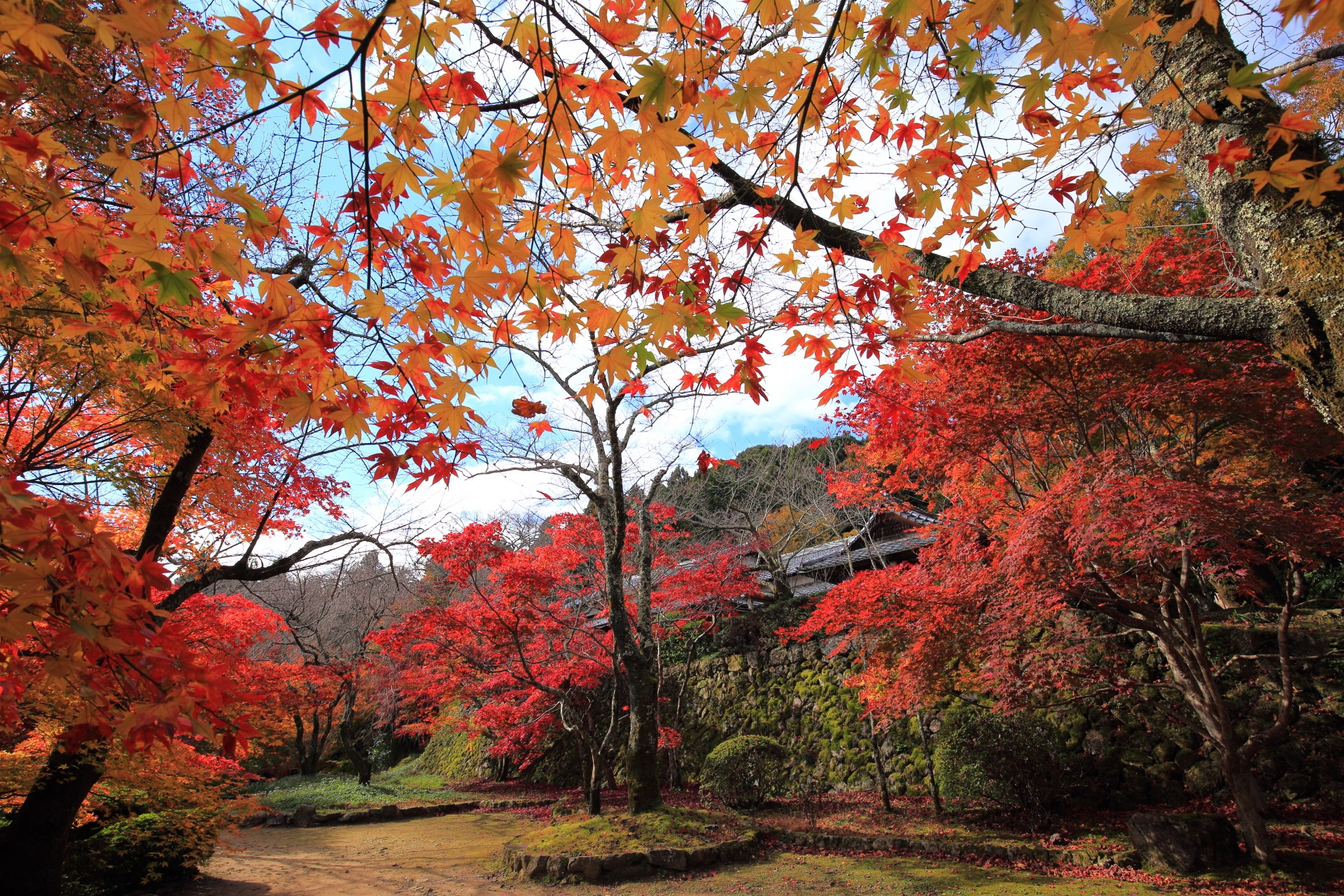 色とりどりの鮮やかな紅葉でいっぱいの凄すぎる秋の勝持寺
