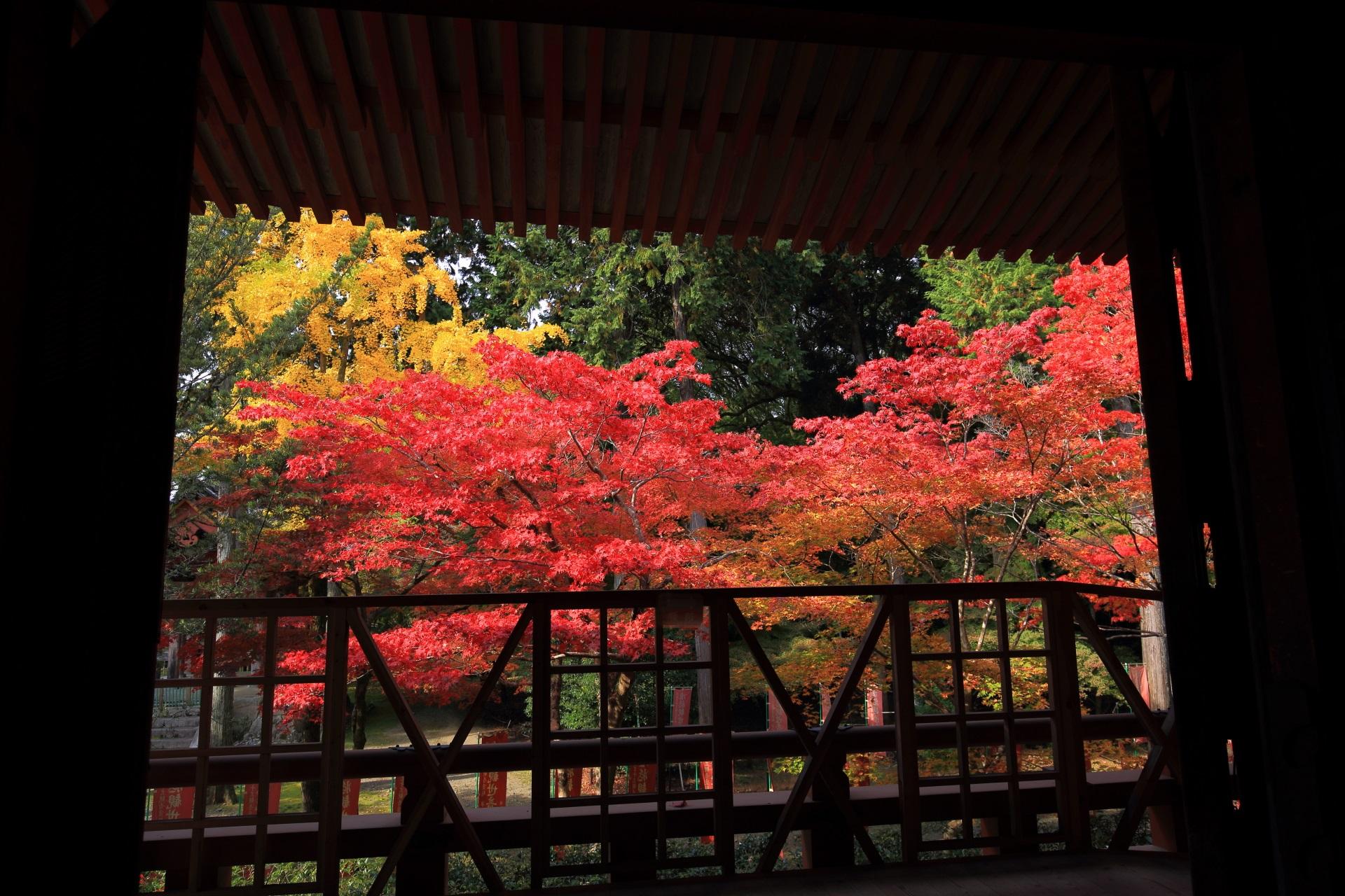 観音堂から眺めた煌く額縁の紅葉