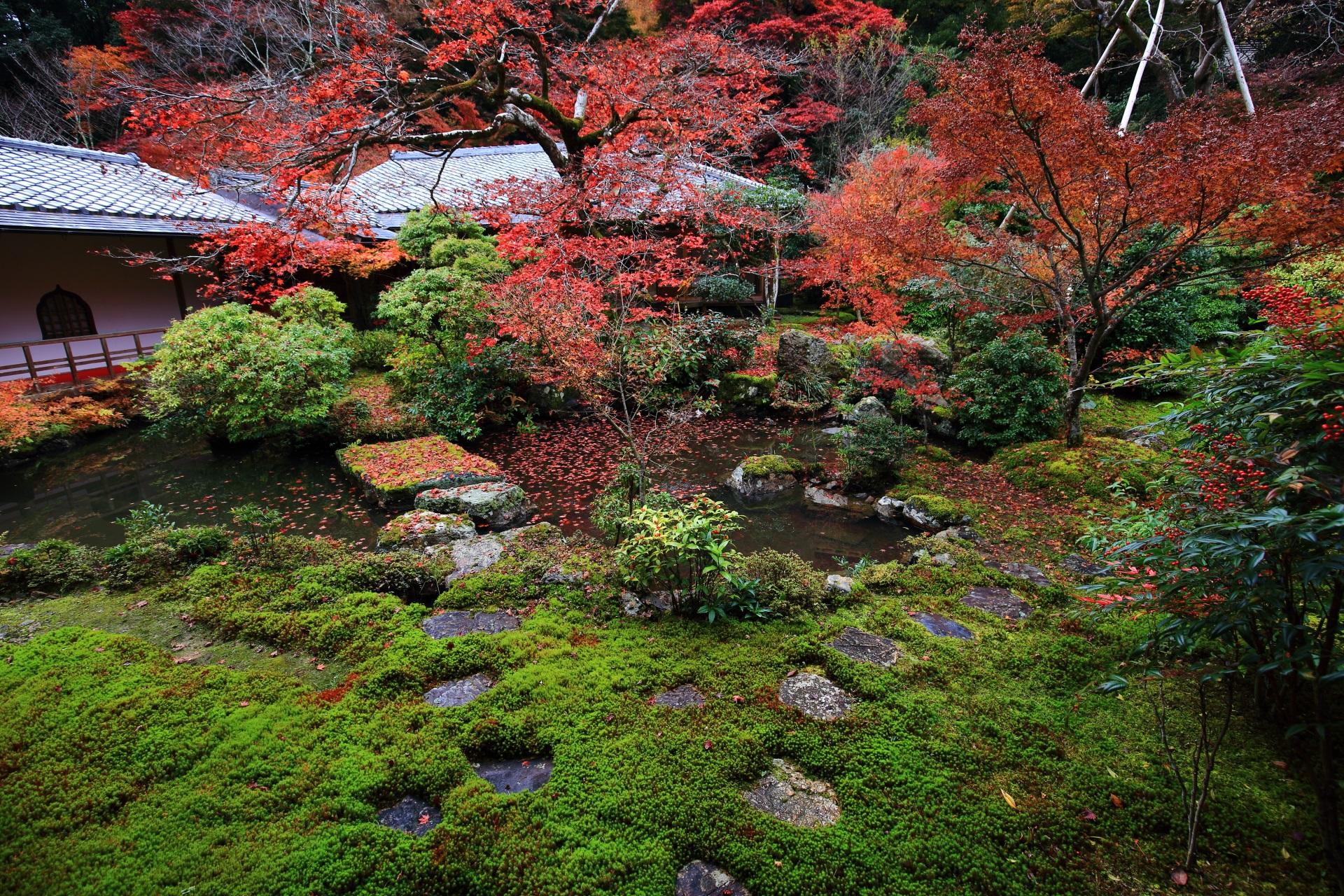 実相院門跡の池泉式庭園の水と緑を彩る紅葉と散りもみじ