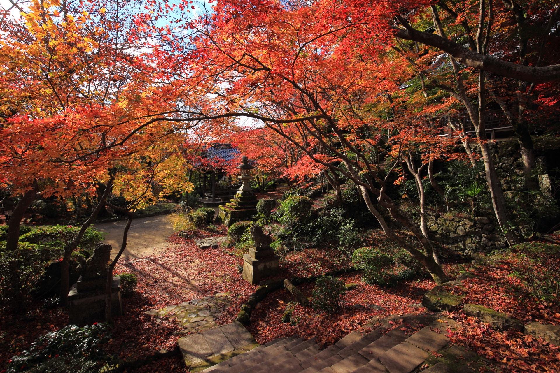 勝持寺の本堂前から見渡した秋の境内