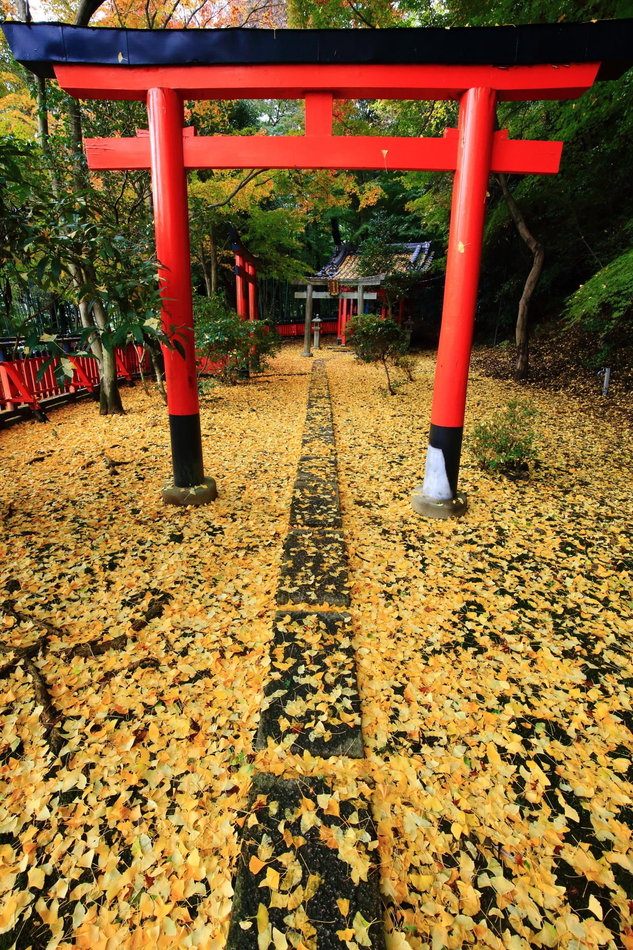 赤い鳥居の下に続く黄色い散り銀杏の道