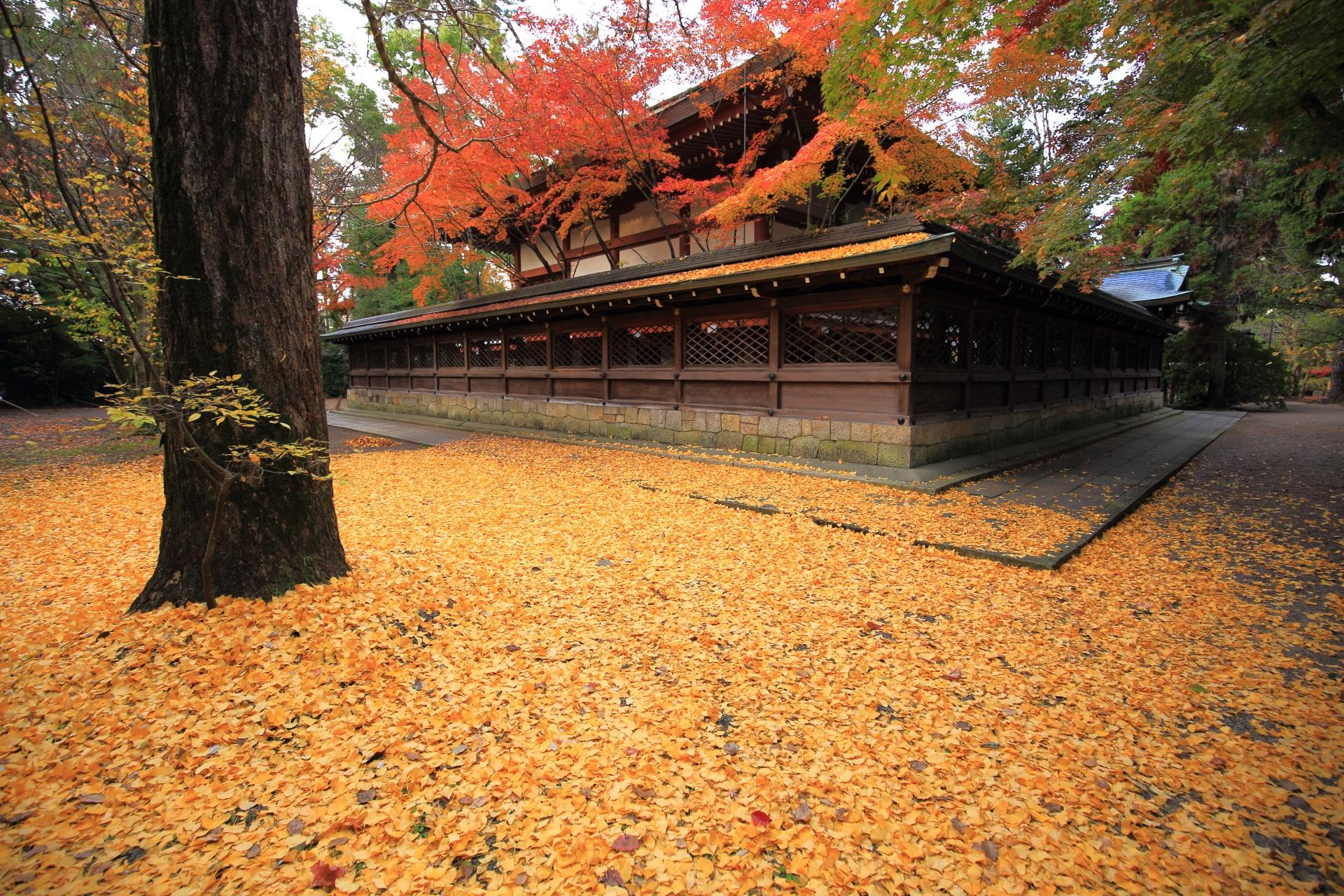 Kyoto Kamigoryo-jinja shrine ginkgo