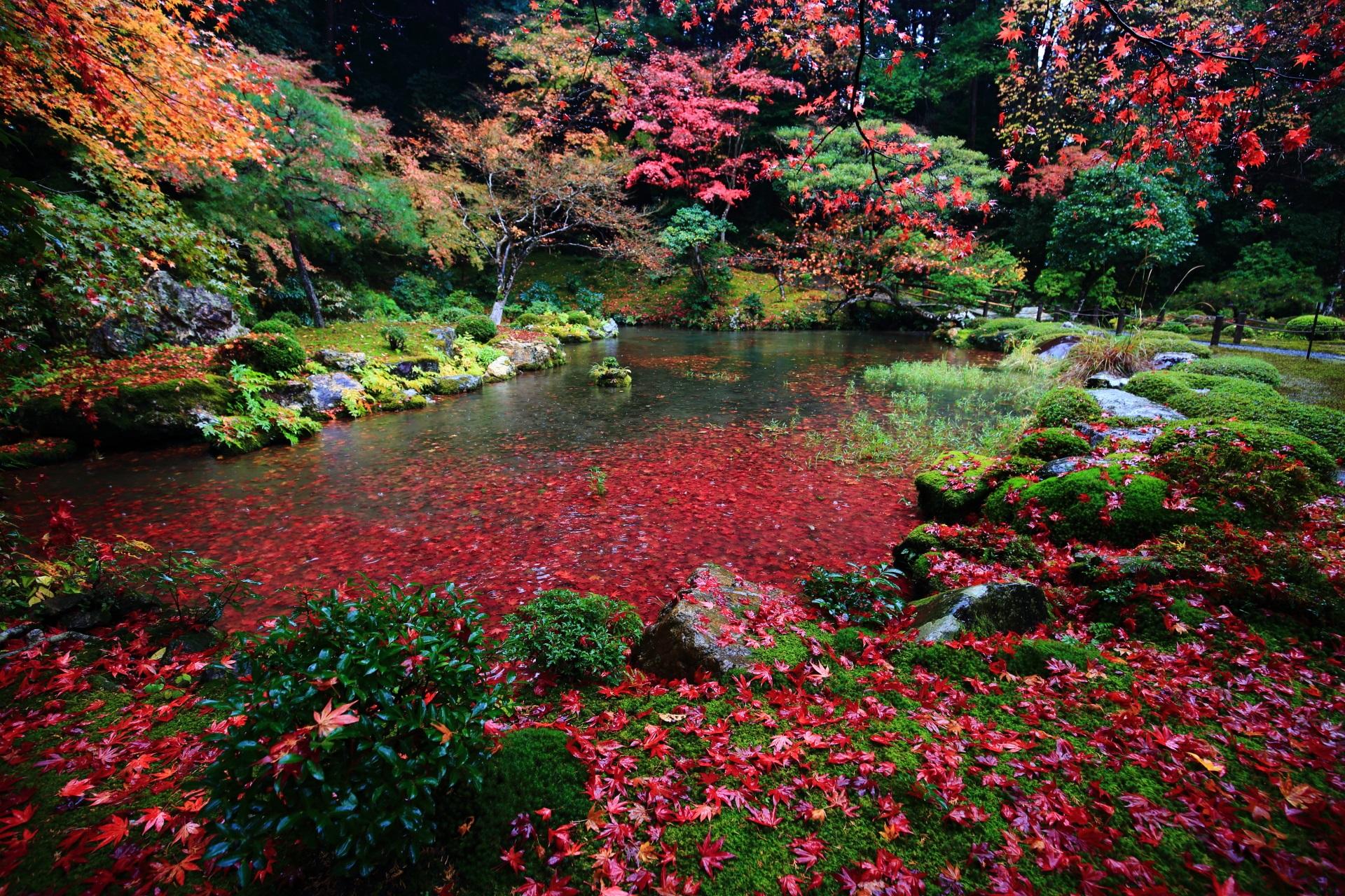 赤色が中心の散り紅葉と赤い池