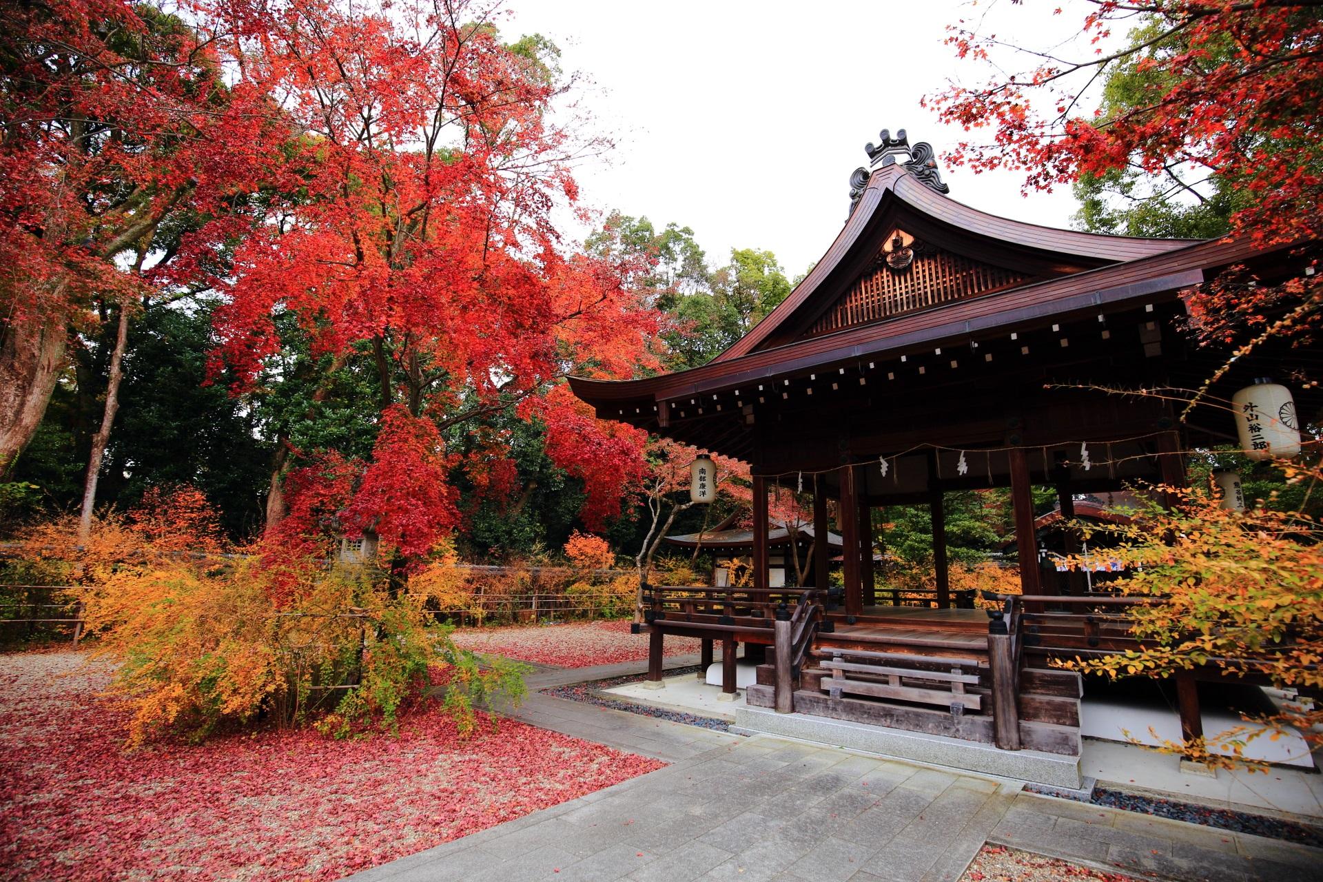 colored leaves Nashinoki-jinja shrine in Kyoto,Japan